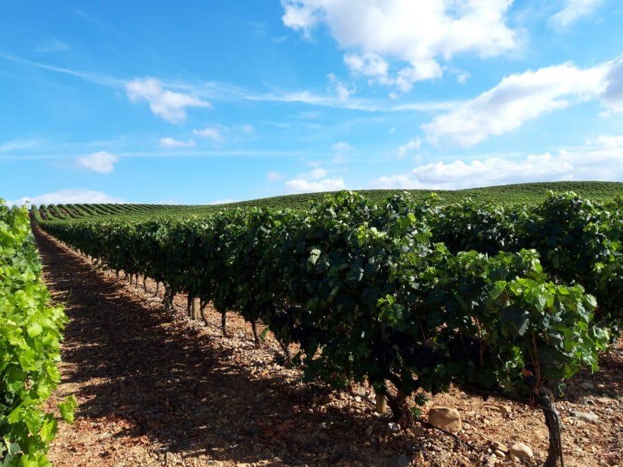Una cosecha para grandes vinos 7
