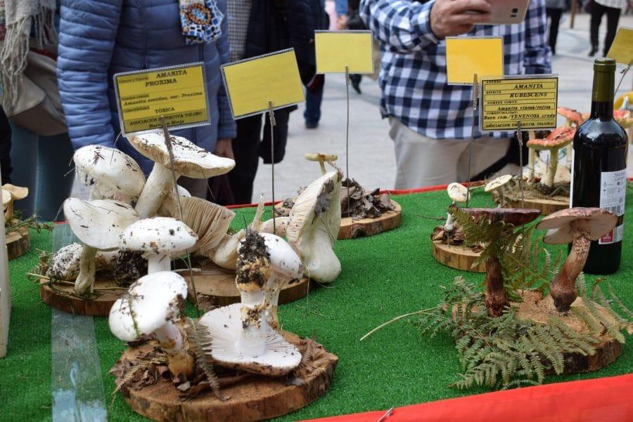 Domingo Garrido, Premio Carlos Aguirre de las Jornadas Micológicas Jarreras 7
