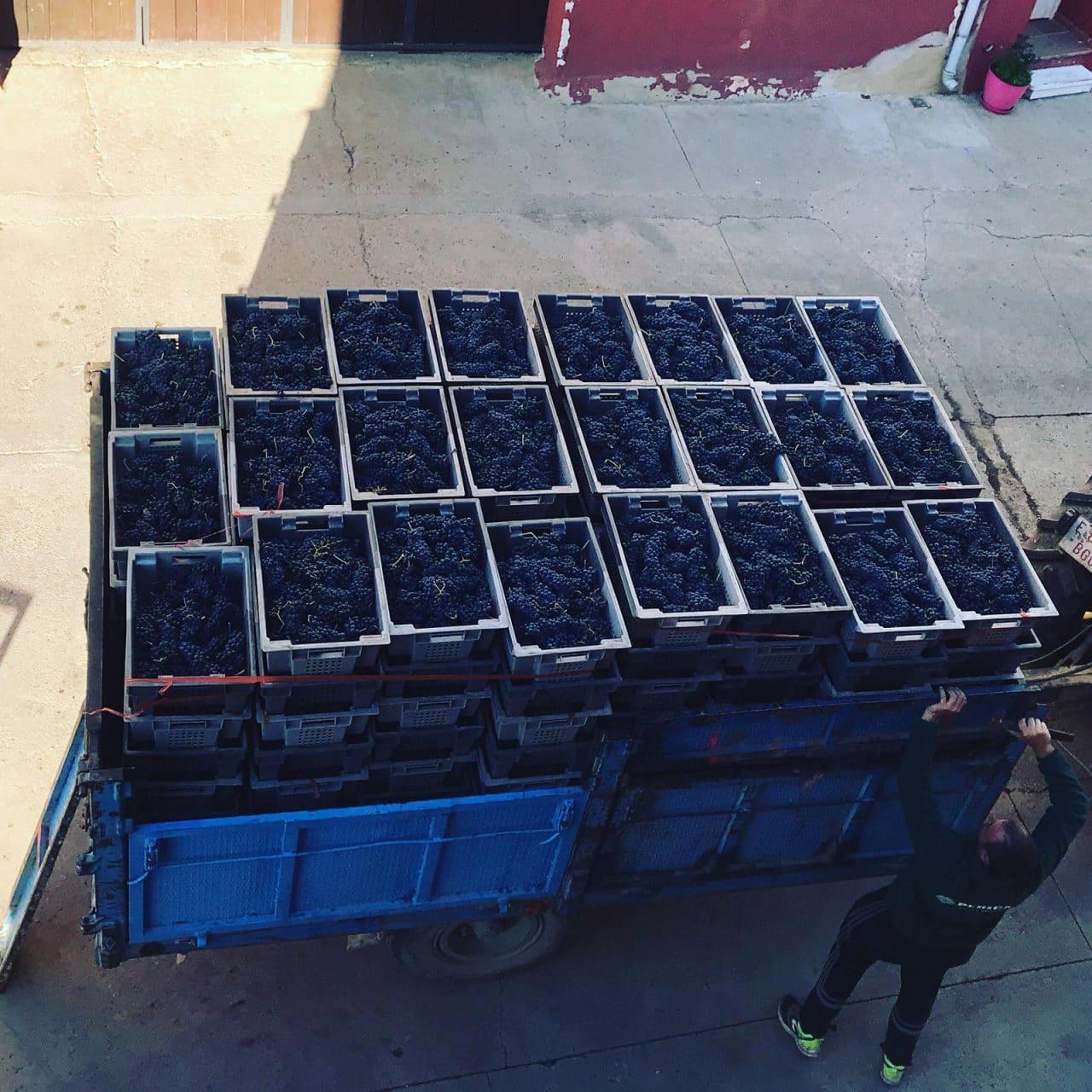"""El Gobierno riojano muestra una posición """"firme y contundente"""" en defensa de la viticultura de calidad 3"""
