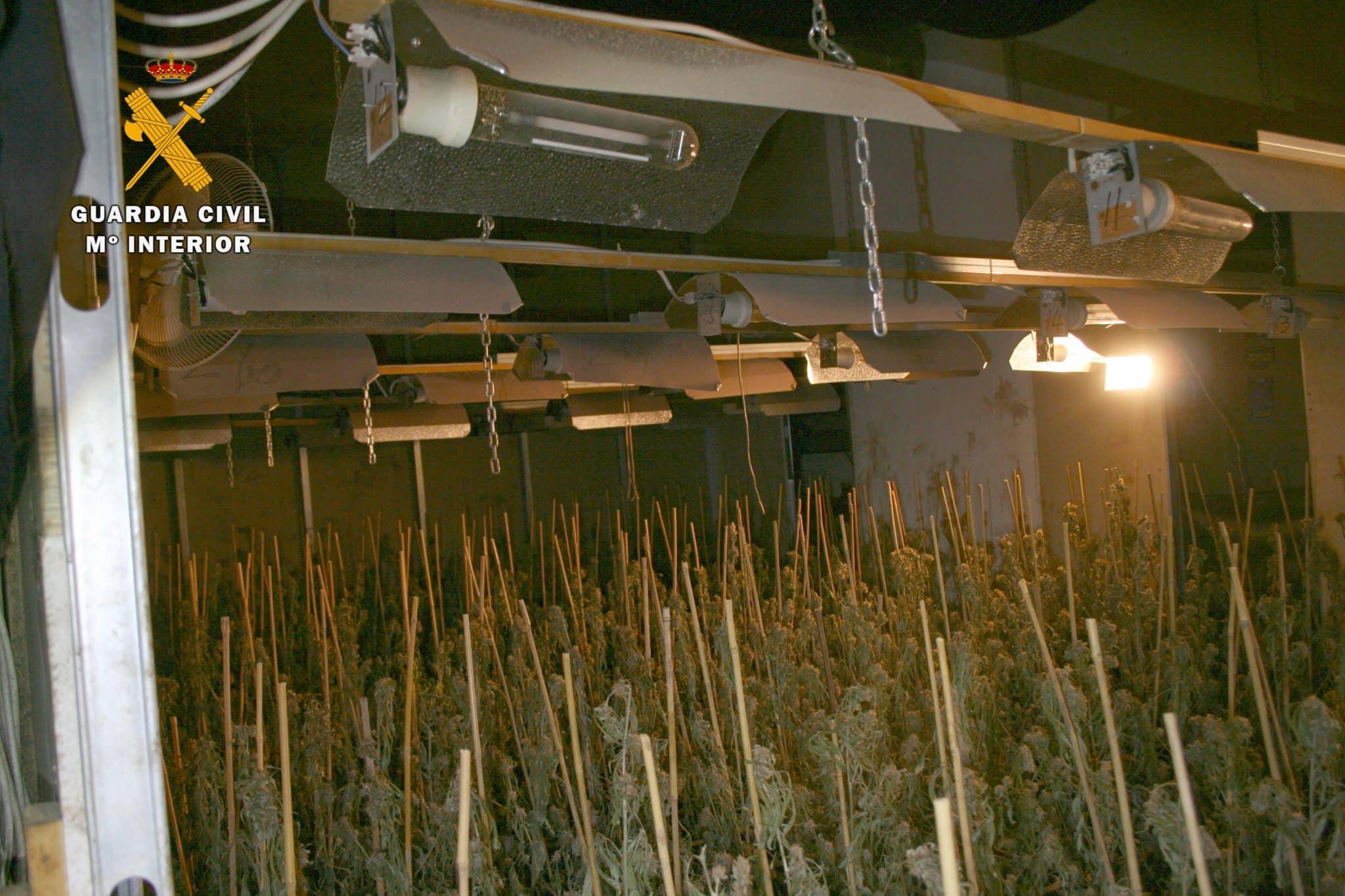 Desmantelan en La Rioja un nuevo laboratorio 'indoor' de marihuana a gran escala 1