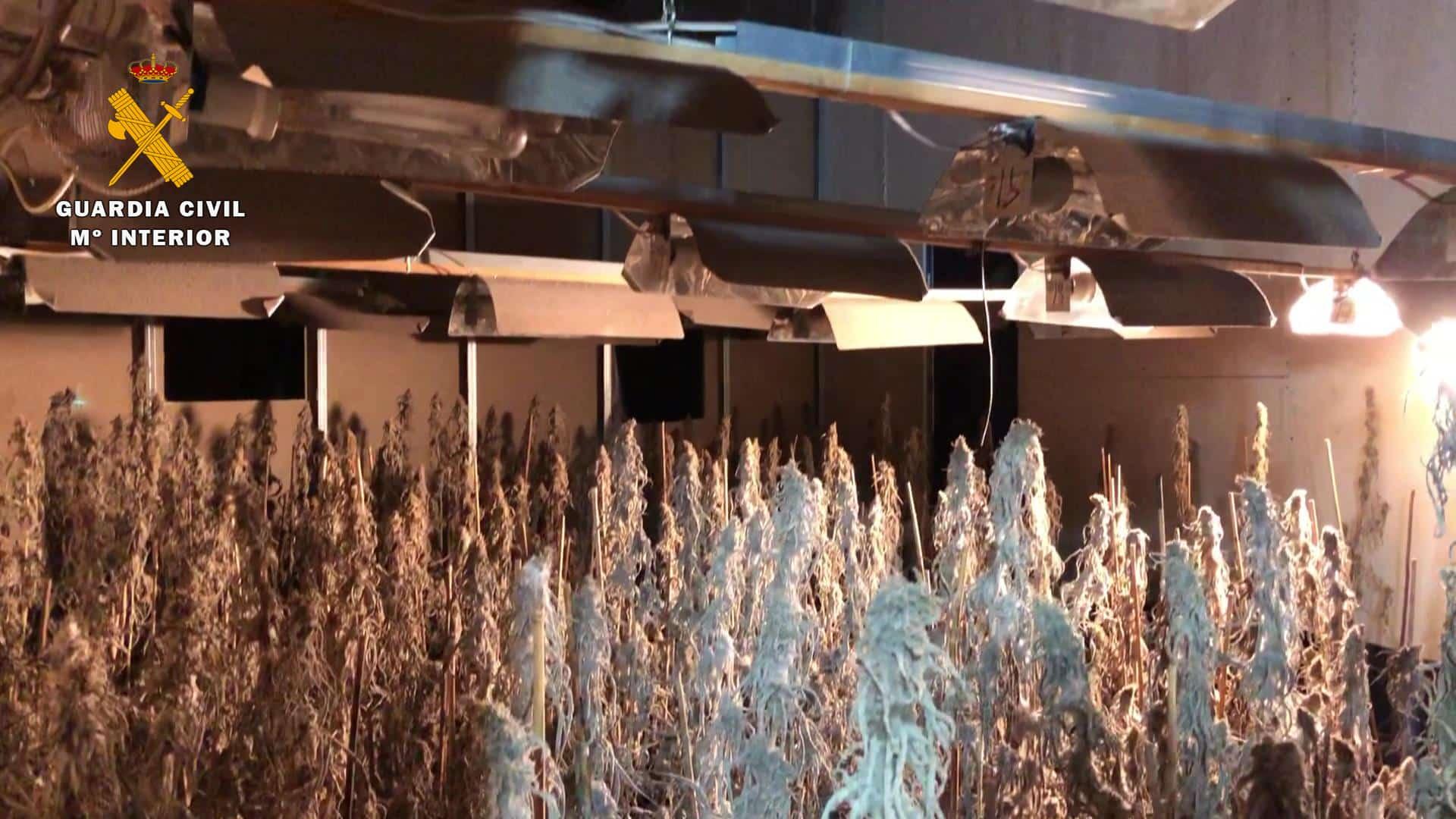 Desmantelan en La Rioja un nuevo laboratorio 'indoor' de marihuana a gran escala 5