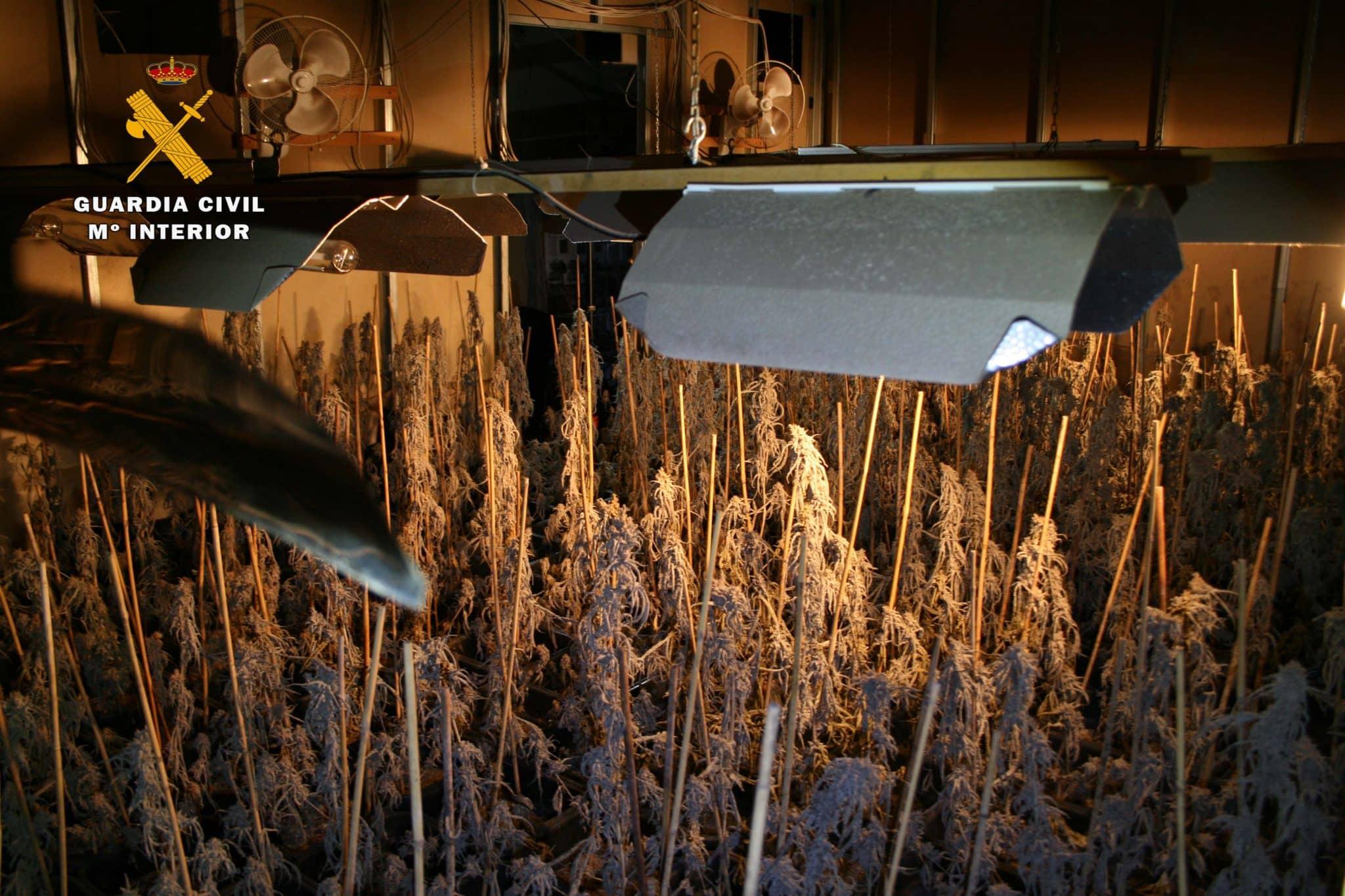 Desmantelan en La Rioja un nuevo laboratorio 'indoor' de marihuana a gran escala 4