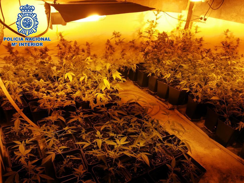 'Operación Canaleta': Dos personas detenidas en Navarrete por cultivo y distribución de marihuana en La Rioja 1