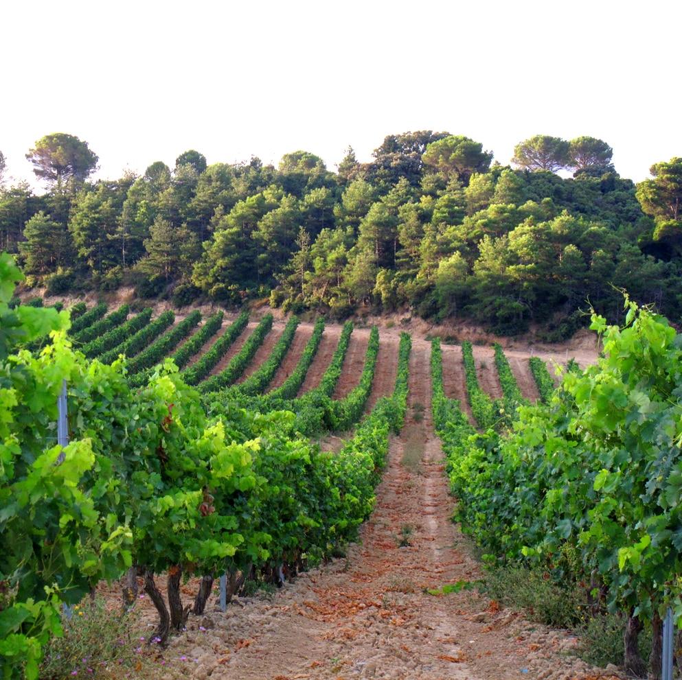 Hacienda El Ternero: El Rioja de Castilla 6