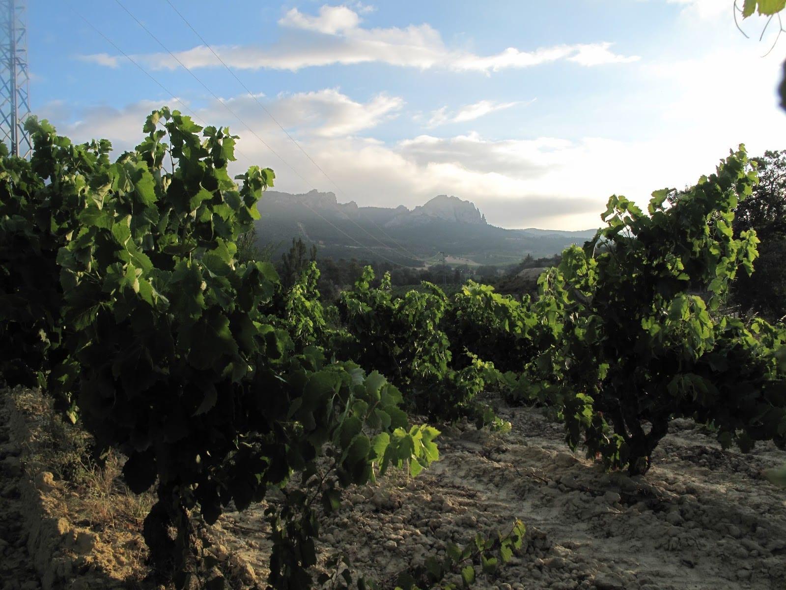 Hacienda El Ternero: El Rioja de Castilla 7