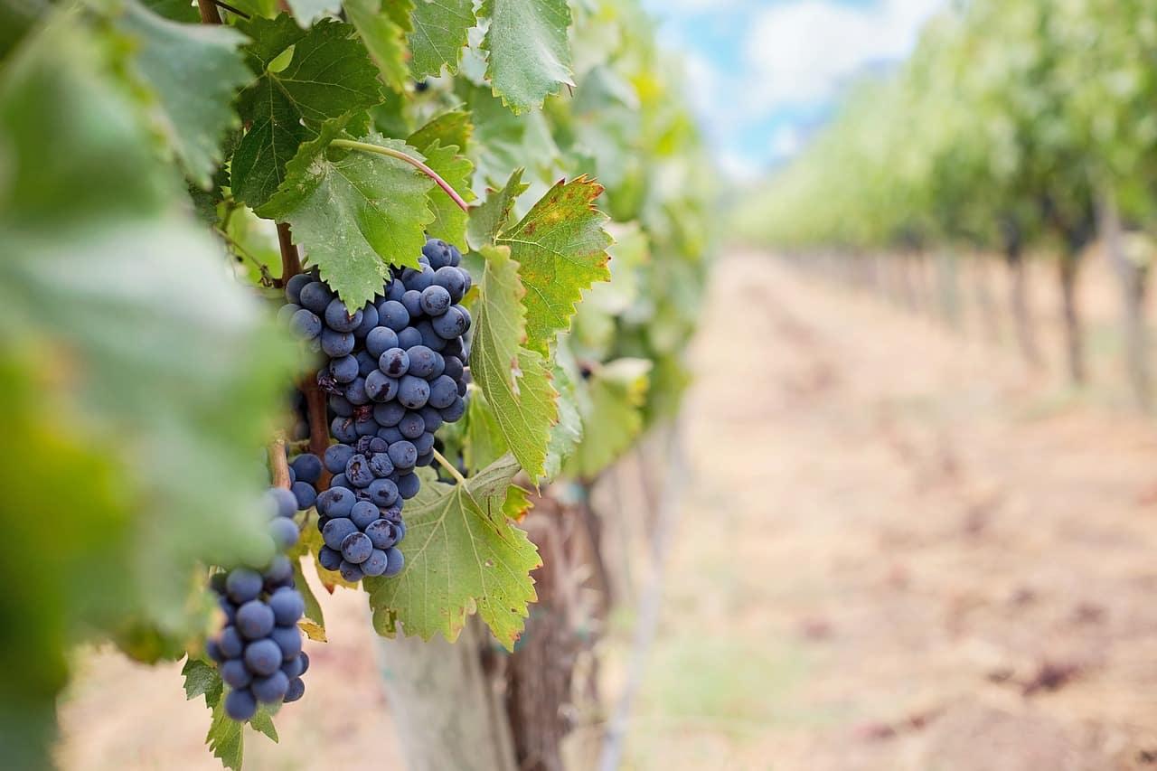 La Rioja recibirá más de 10 millones de euros de euros de la UE y del Gobierno de España para programas agrícolas, ganaderos y de desarrollo rural 1