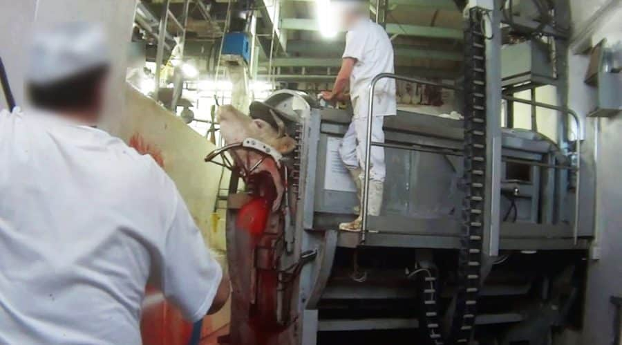 El Parlamento insta al Gobierno de La Rioja a instalar cámaras de vigilancia en mataderos 1