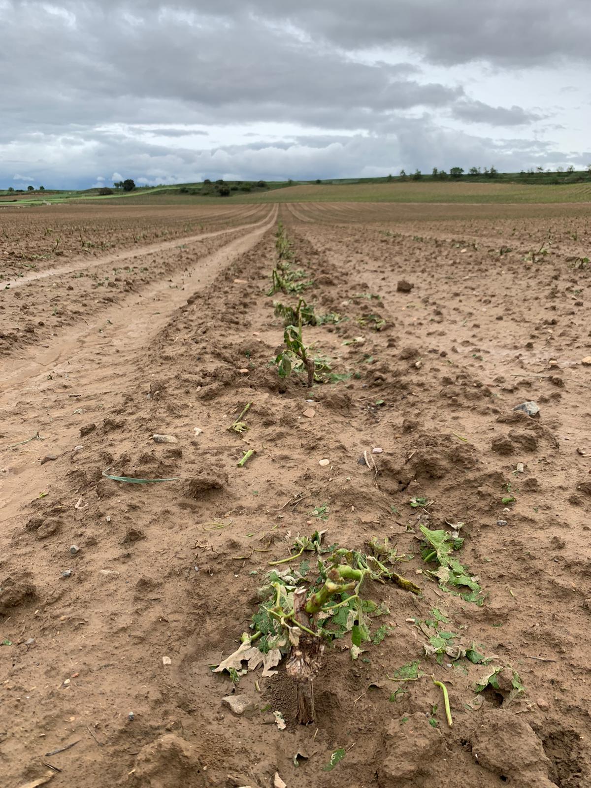 Una fuerte tormenta de agua y granizo deja daños en la comarca de Haro 4