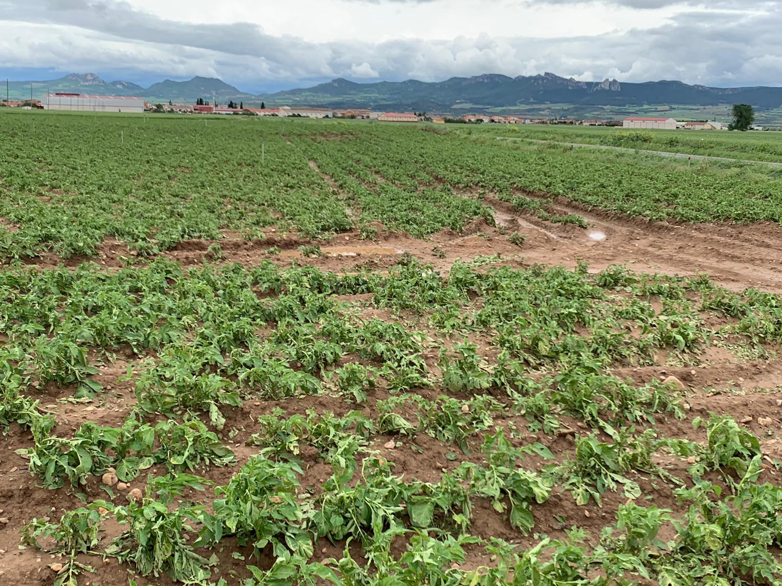 Una fuerte tormenta de agua y granizo deja daños en la comarca de Haro 13