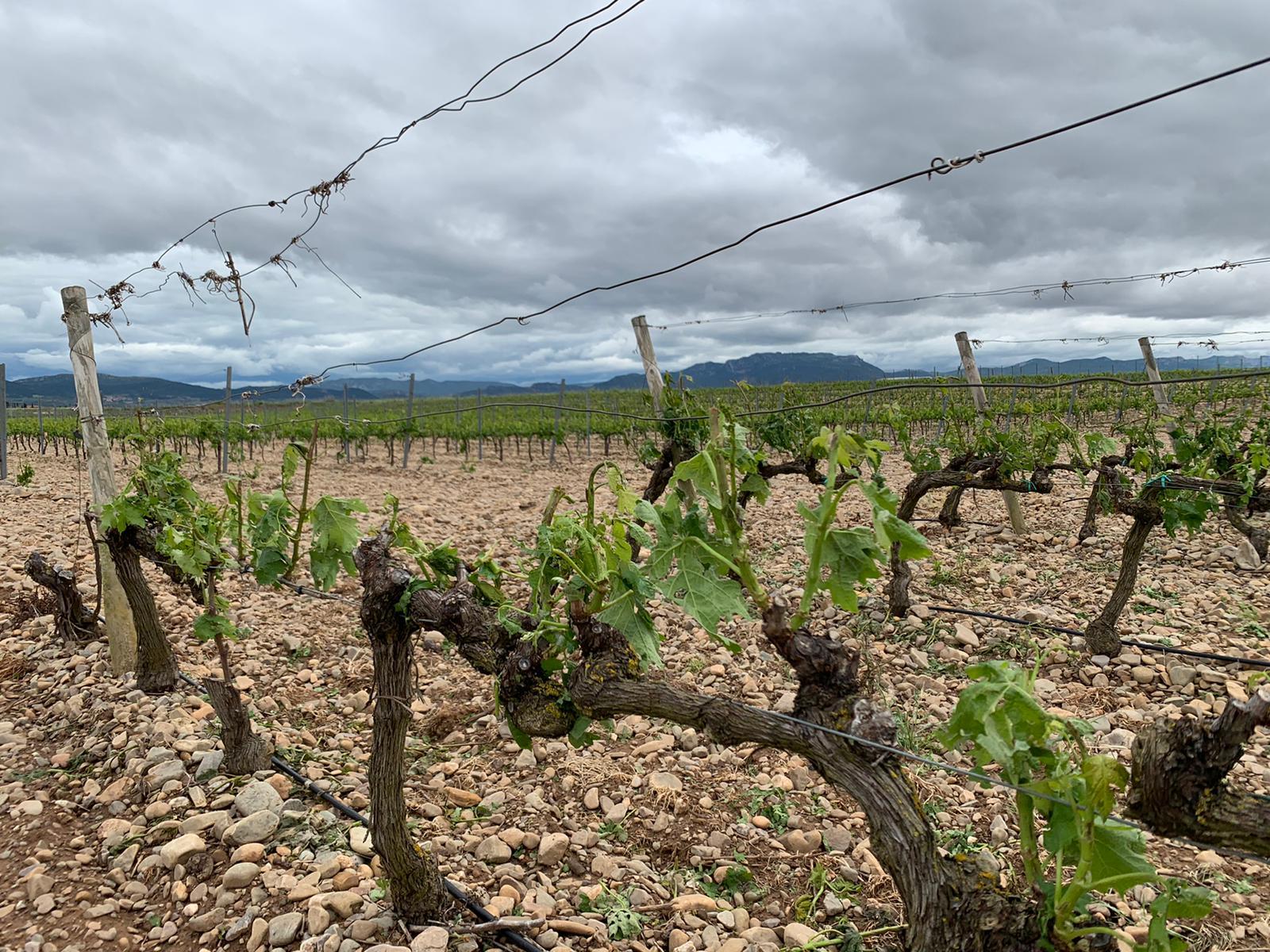Una fuerte tormenta de agua y granizo deja daños en la comarca de Haro 8