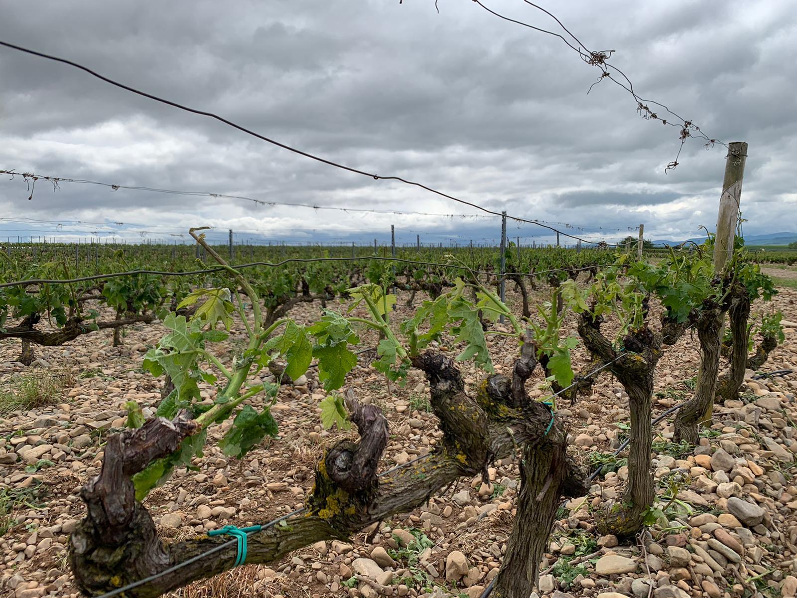 Una fuerte tormenta de agua y granizo deja daños en la comarca de Haro 21