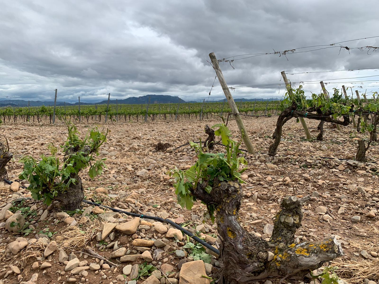Una fuerte tormenta de agua y granizo deja daños en la comarca de Haro 7