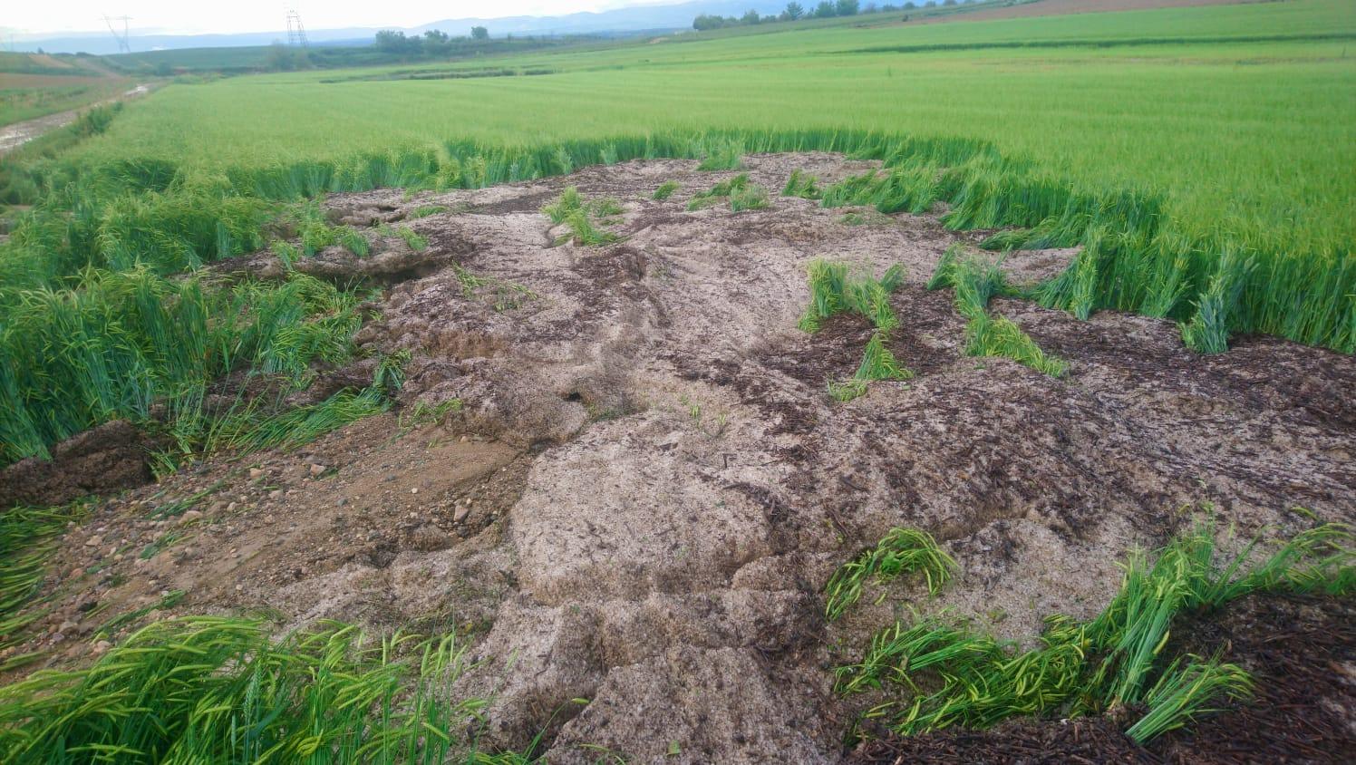 Una fuerte tormenta de agua y granizo deja daños en la comarca de Haro 19