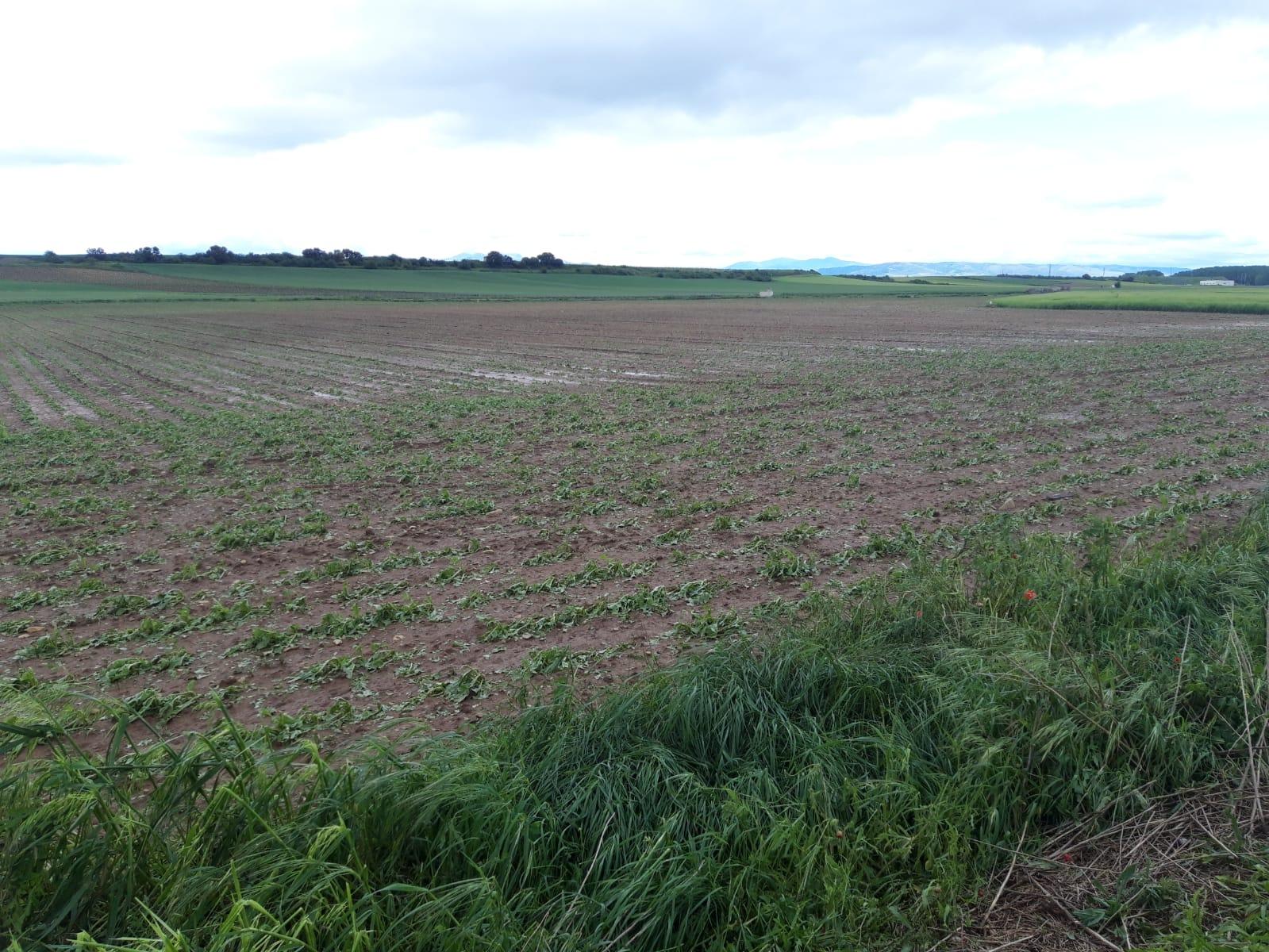 Una fuerte tormenta de agua y granizo deja daños en la comarca de Haro 18