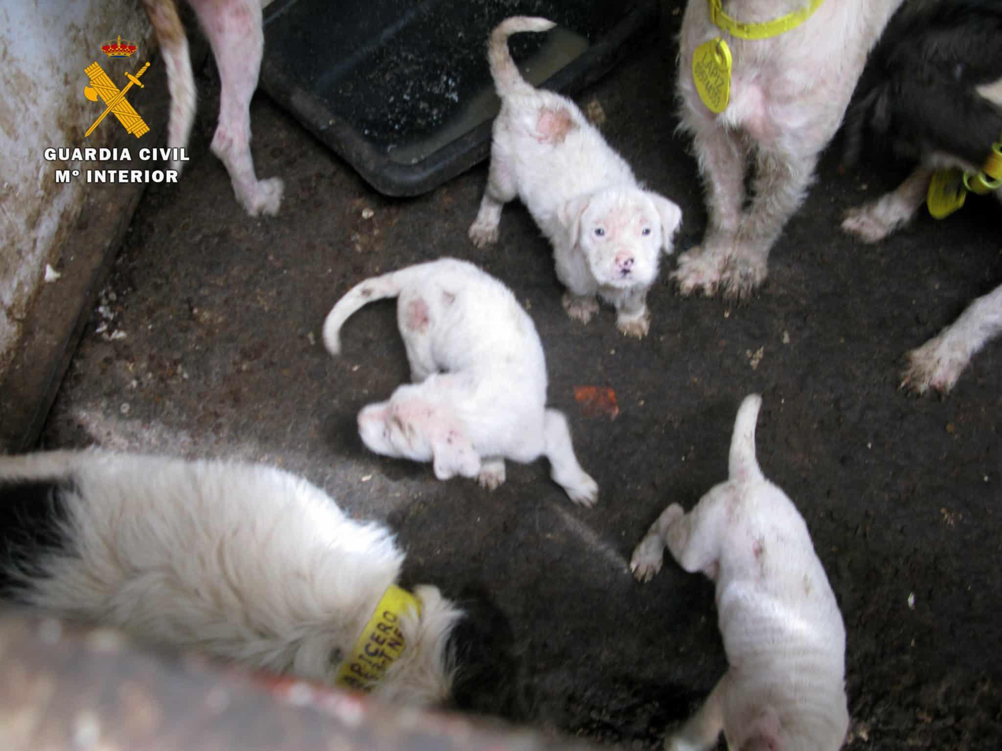 El Seprona ha investigado a un vecino de San Asensio por maltrato animal 5