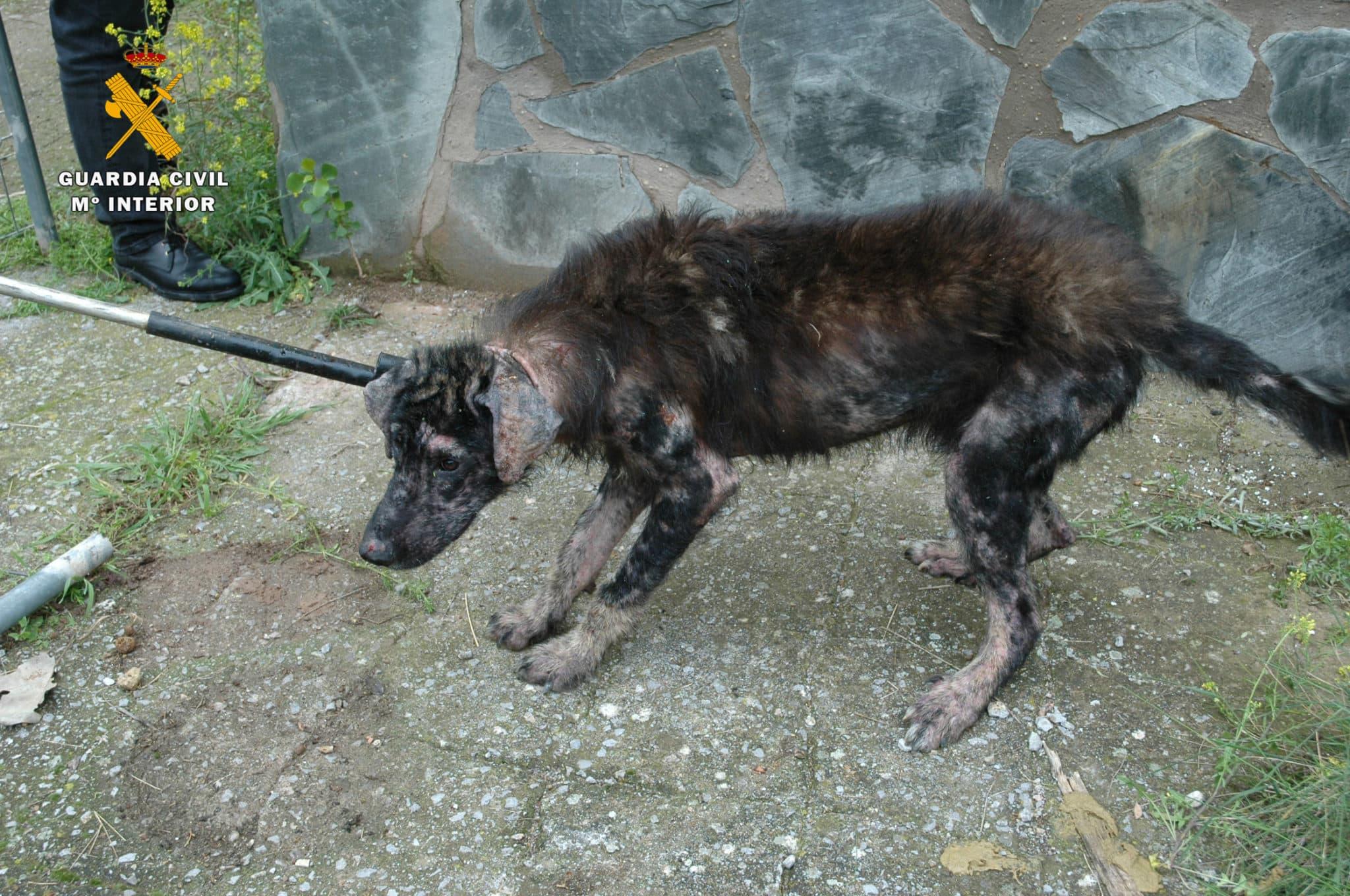 El Seprona investiga a un vecino de Logroño por delitos de maltrato animal y abandono 1