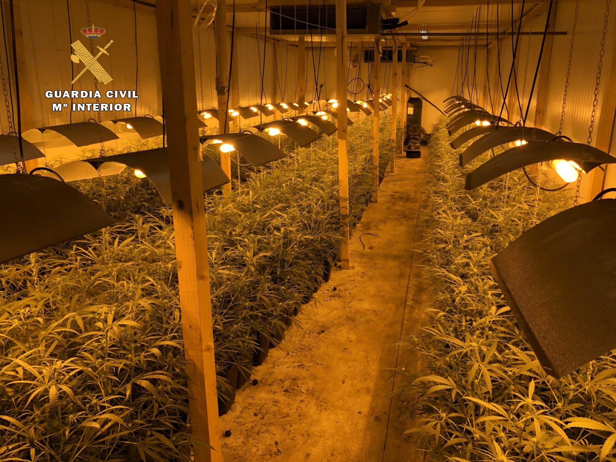 Operación 'Apostaxi': Desmantelada una organización delictiva que elaboraba y distribuía marihuana en La Rioja y Euskadi 3