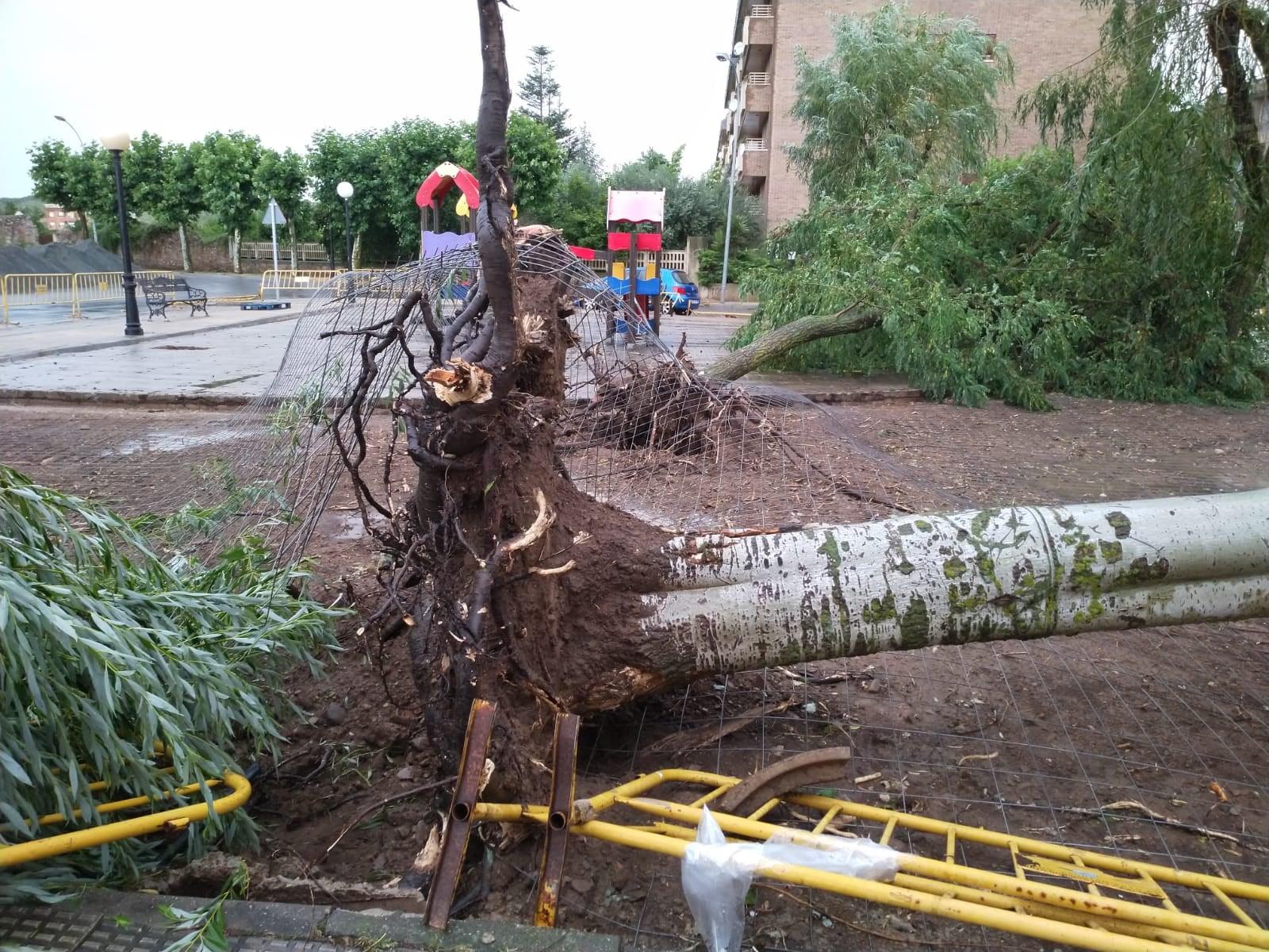 VÍDEO: Las lluvias y tormentas provocan varios destrozos en Santo Domingo de la Calzada 4