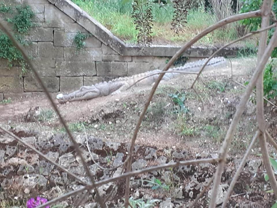 El cocodrilo del Mardancho regresa a Sajazarra 3