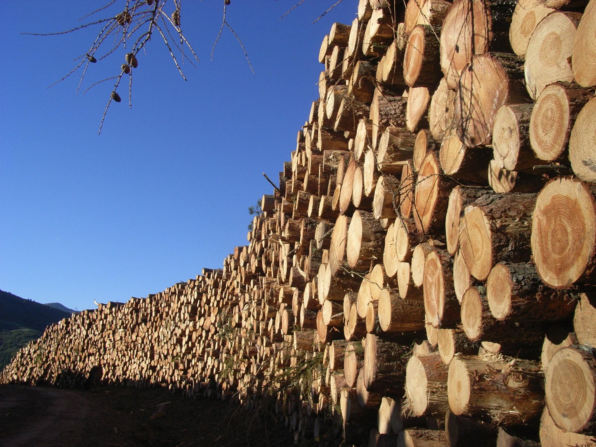 Los bosques de La Rioja almacenan 12,2 millones de toneladas de carbono en 176.826 hectáreas 1