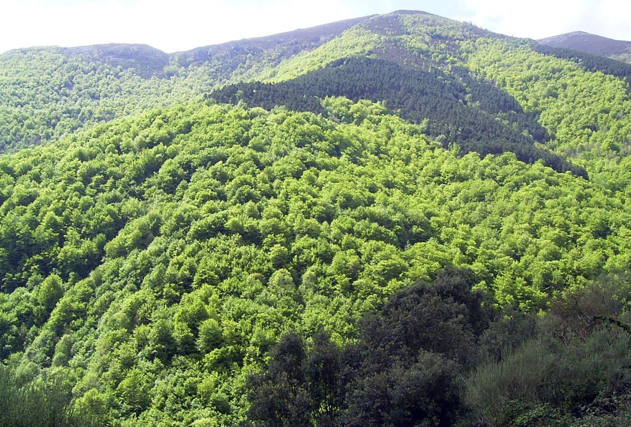 Los bosques de La Rioja almacenan 12,2 millones de toneladas de carbono en 176.826 hectáreas 2