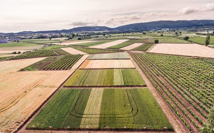 VÍDEO: 'Experimento' de ARAG-ASAJA con nuevas variedades de cereal en Tricio 2