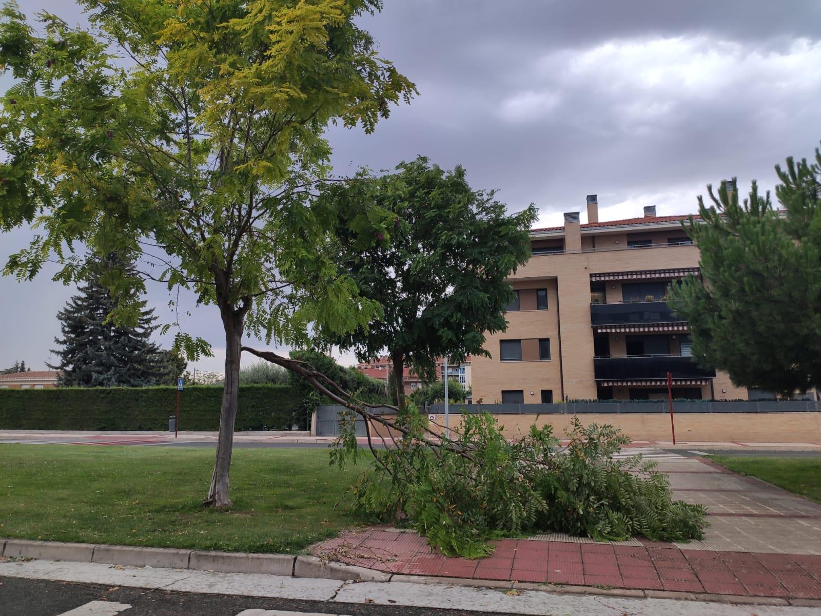 El viento volvió a romper ramas de árboles en la calle Federico García Lorca de Haro.