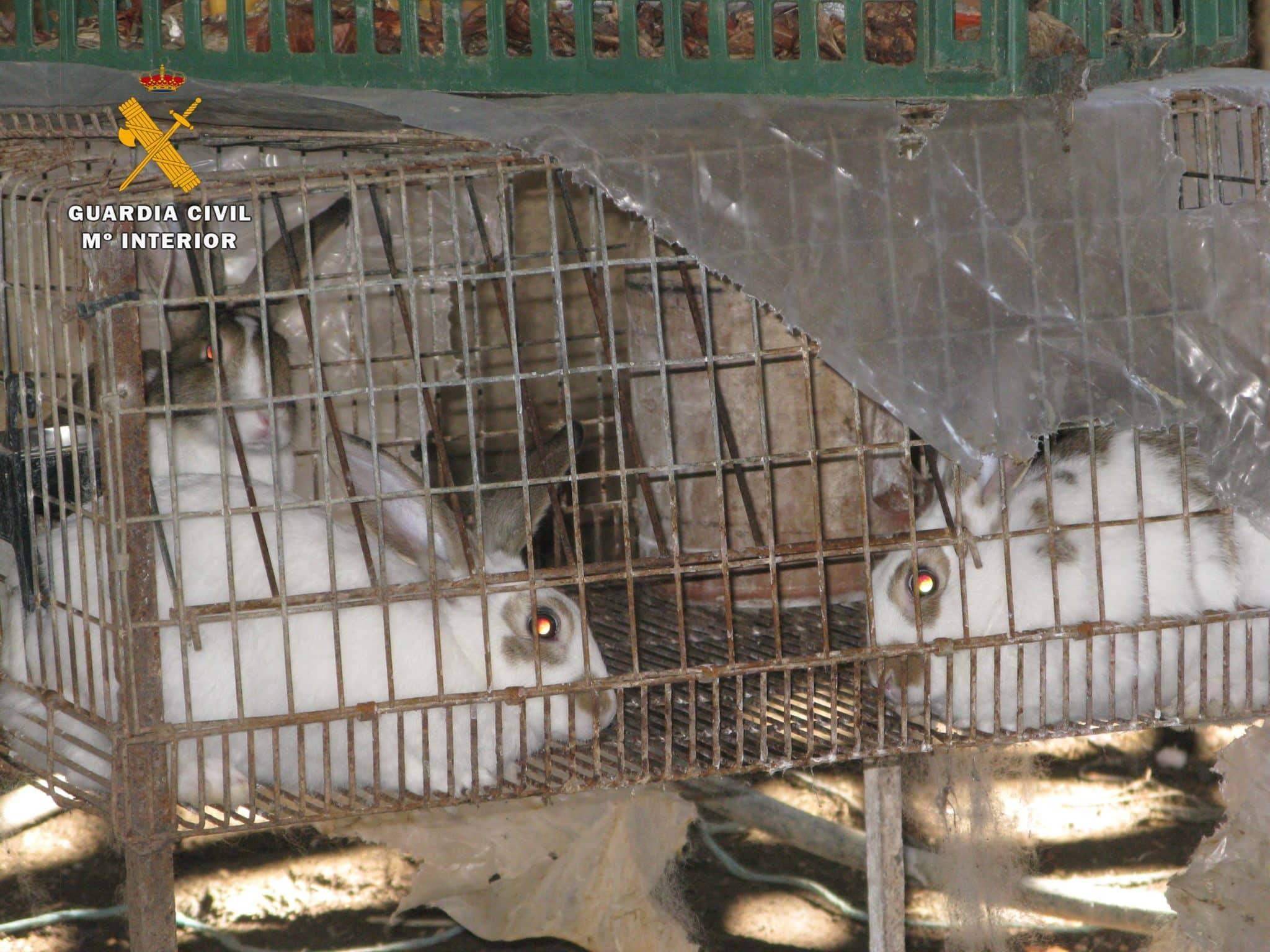 El SEPRONA localiza un 'zoo' ilegal en San Vicente de la Sonsierra con 159 animales 4