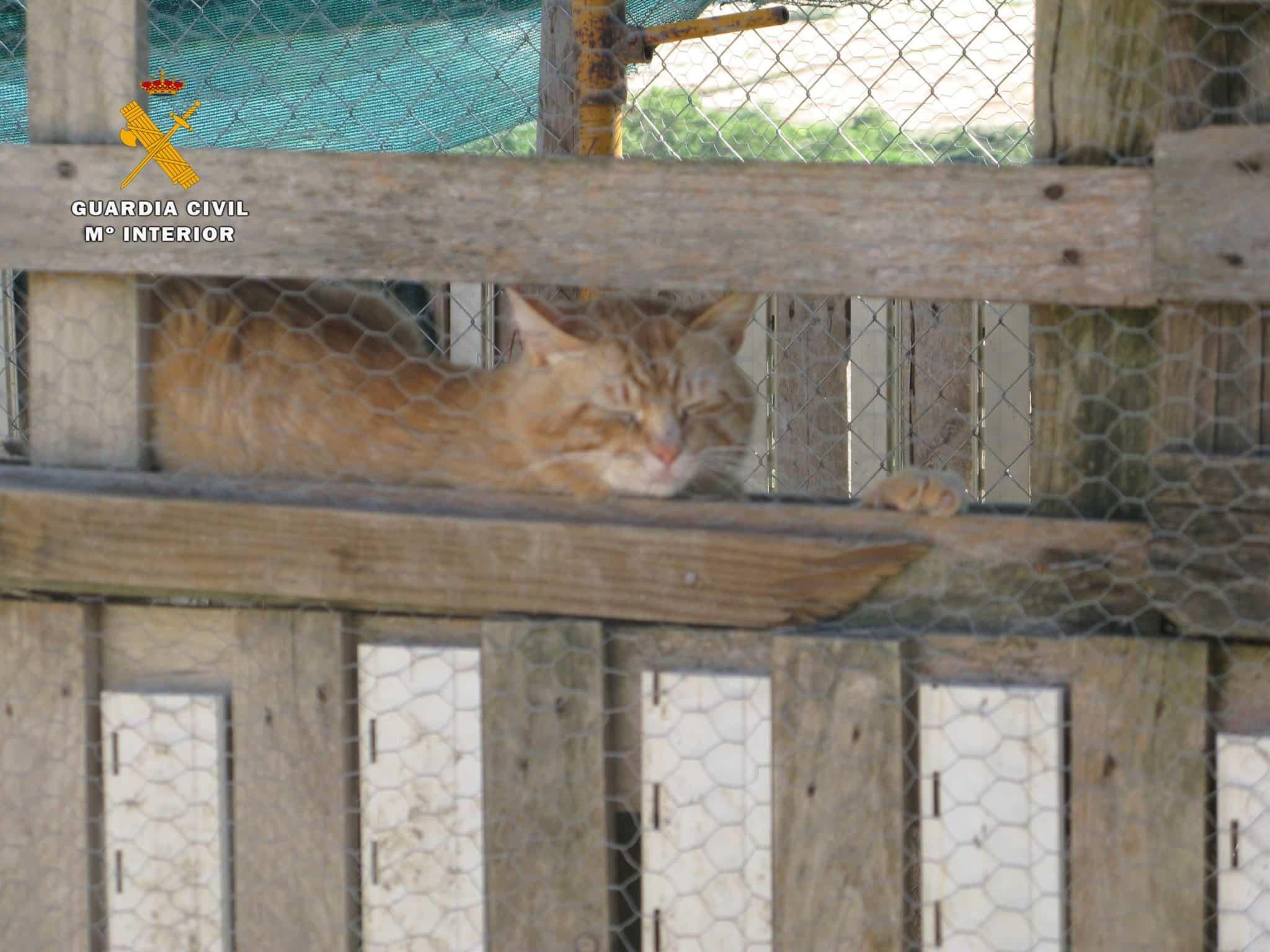 El SEPRONA localiza un 'zoo' ilegal en San Vicente de la Sonsierra con 159 animales 5