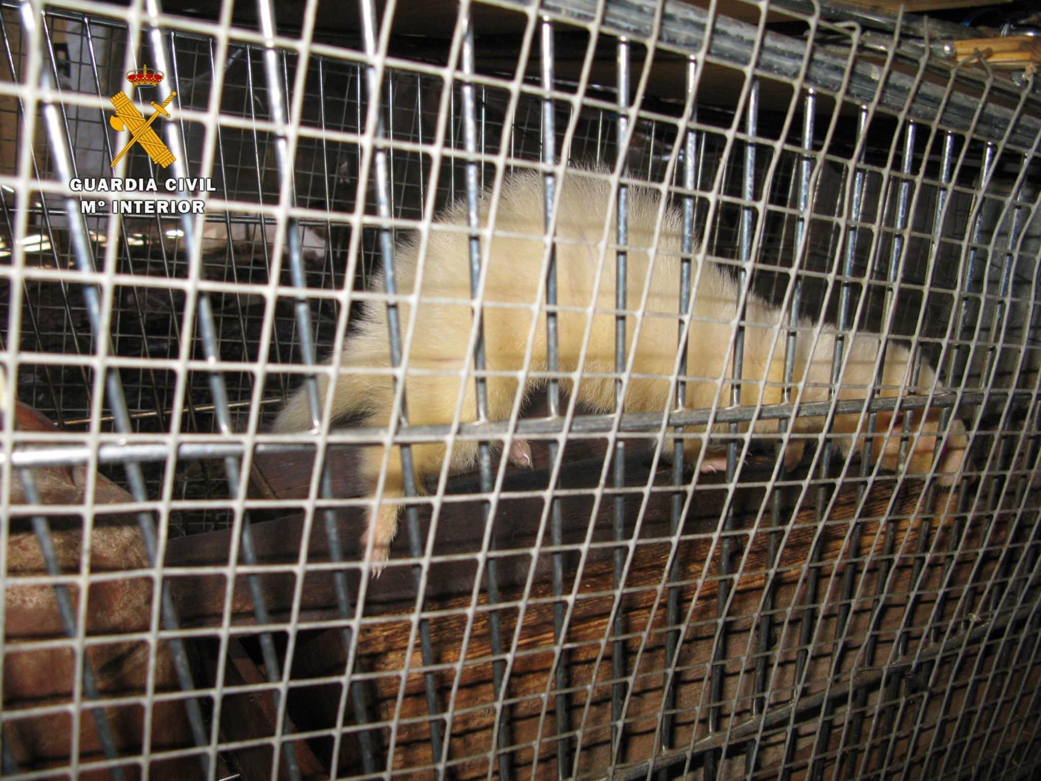 El SEPRONA localiza un 'zoo' ilegal en San Vicente de la Sonsierra con 159 animales 6