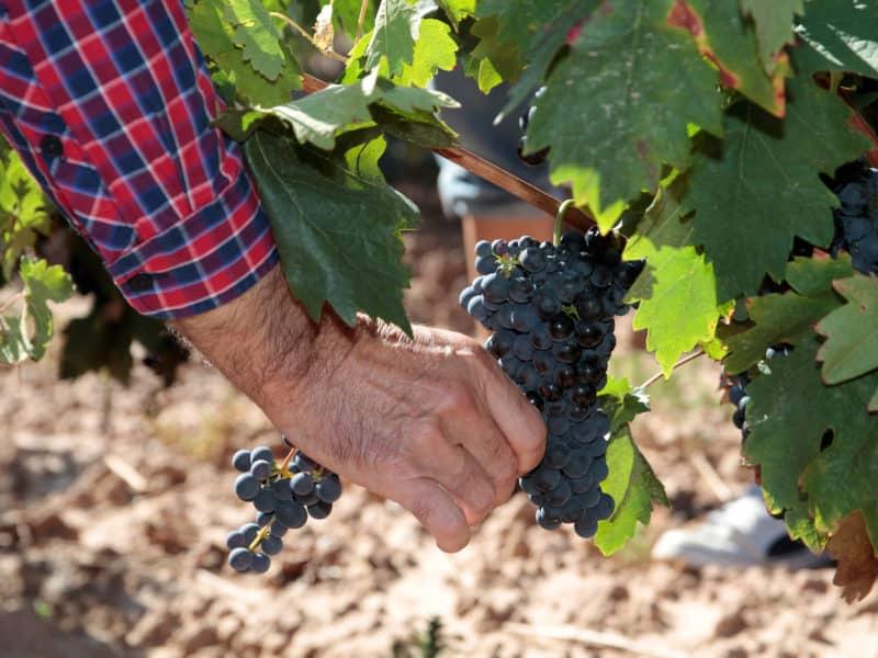 Control de maduración DOCa Rioja