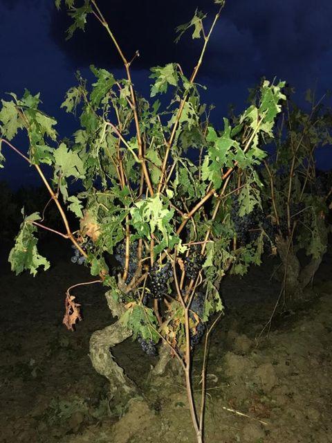 Una fuerte tormenta de granizo hace estragos en La Rioja Alta 6