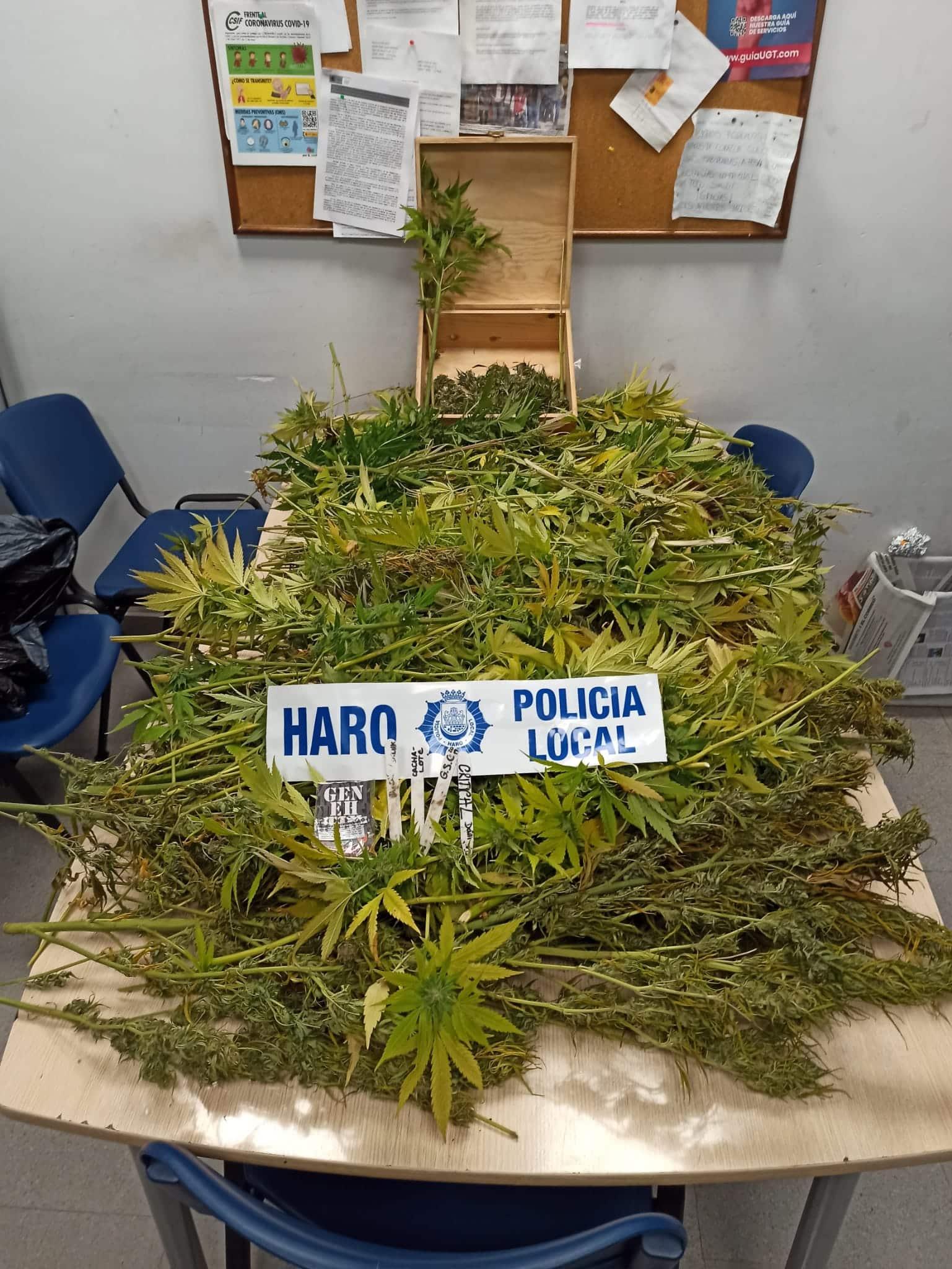 La Policía Local de Haro incauta un centenar de plantas de marihuana en Fuente del Moro 1