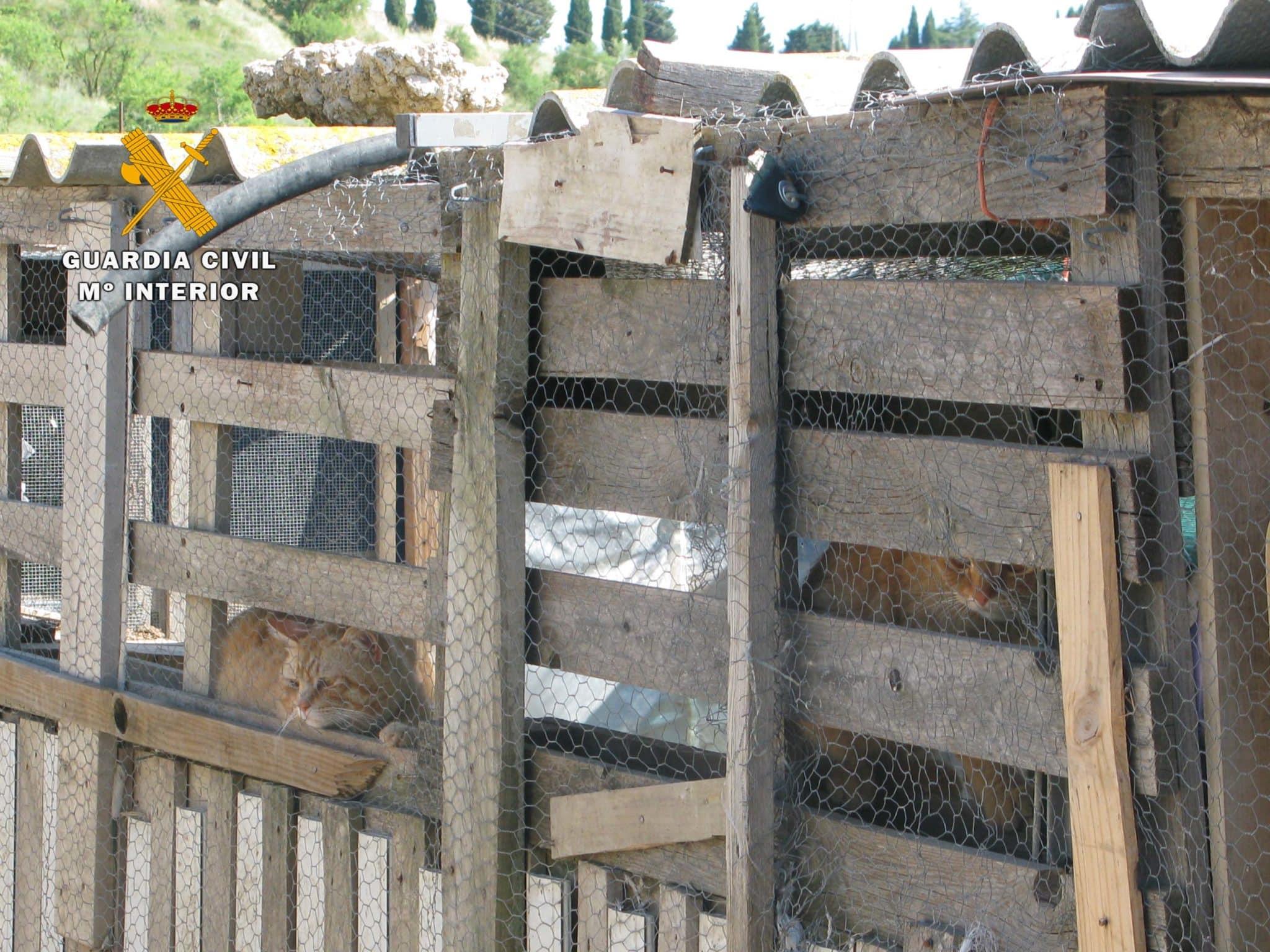 Zoo ilegal