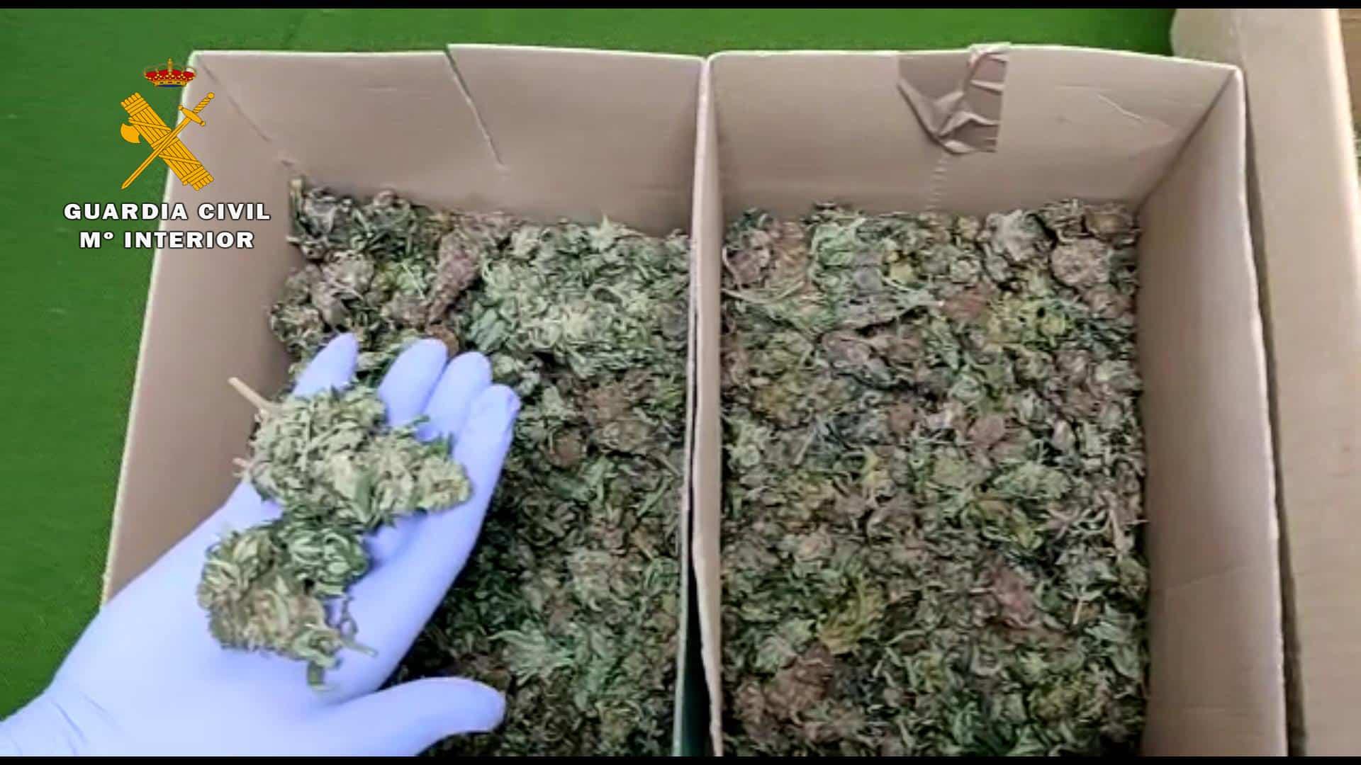 La Guardia Civil descubre varias plantas de marihuana en el interior de una finca de Alcanadre 2