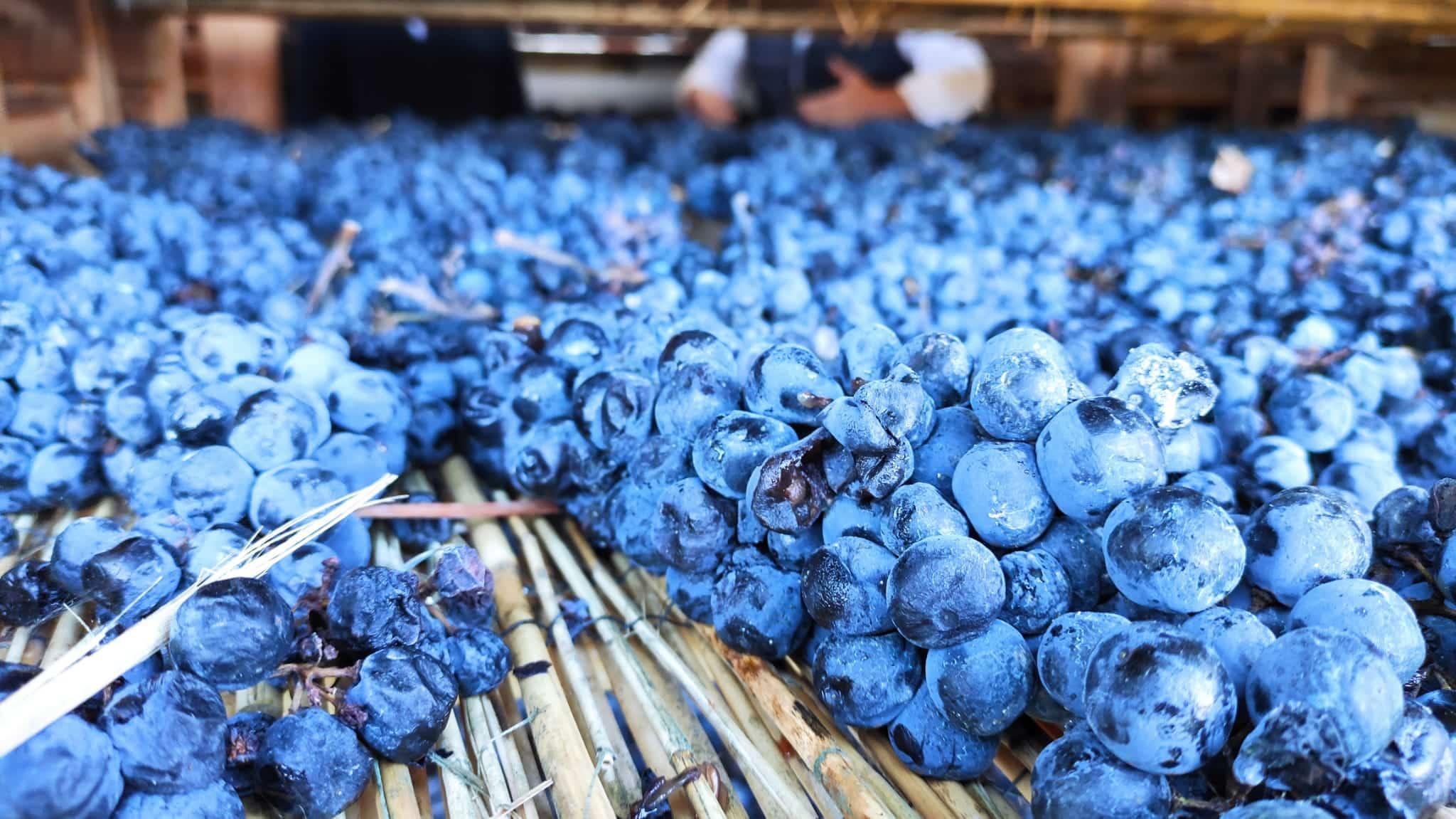 Las tradiciones italiana y riojana se funden en Santalba Amaro 8