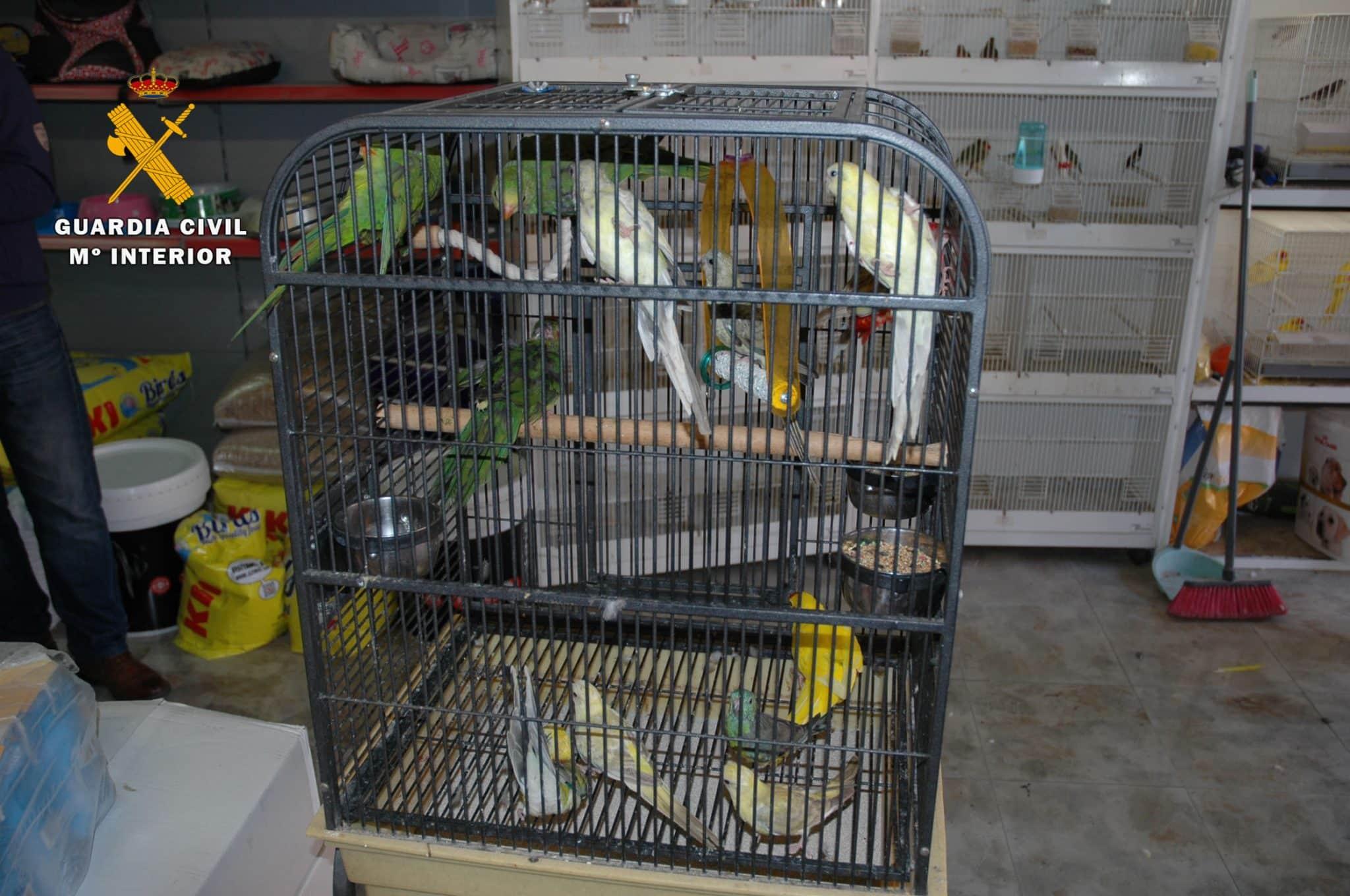 El Seprona interviene 13 aves exóticas en un establecimiento de Logroño 1