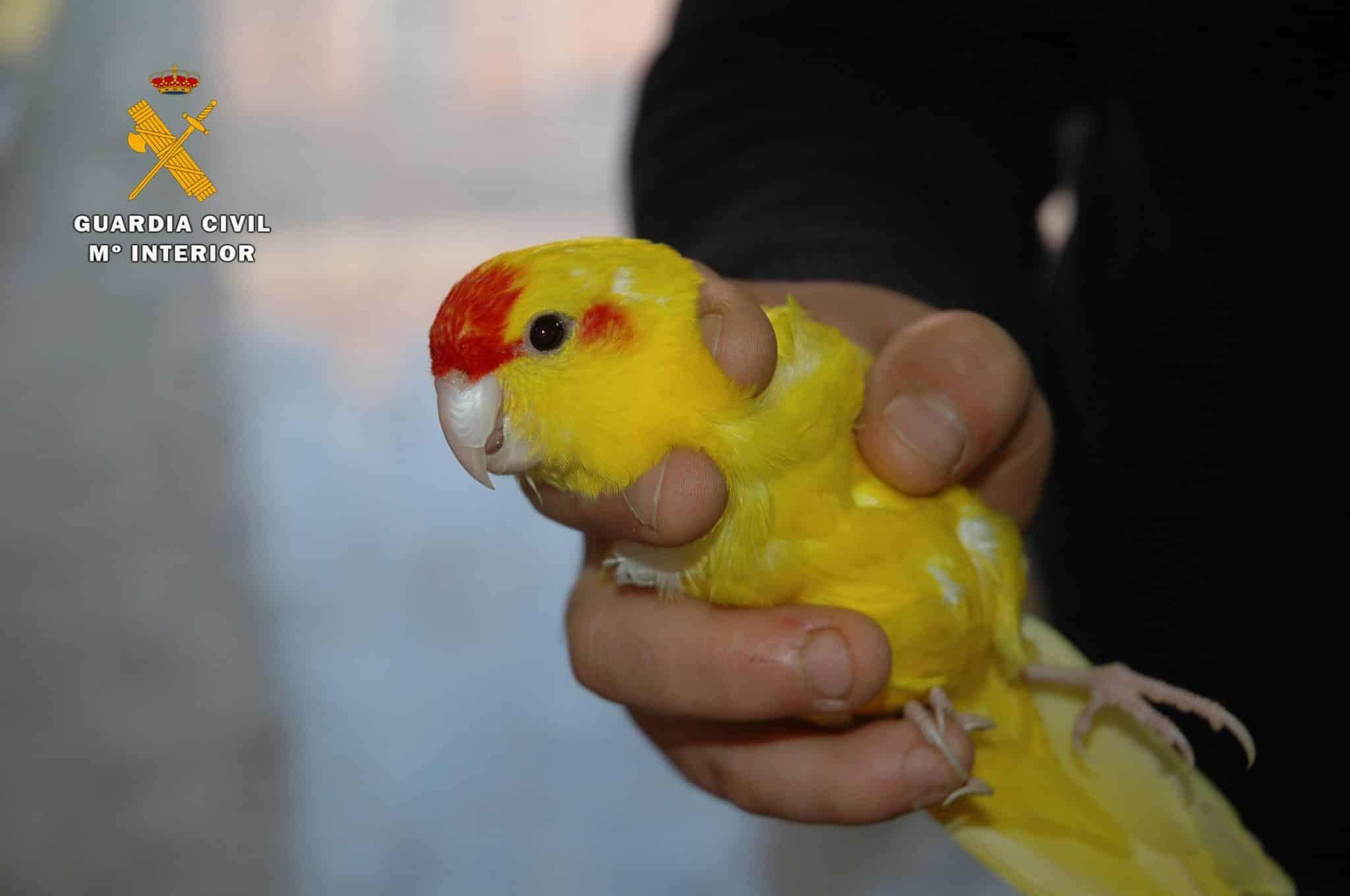 El Seprona interviene 13 aves exóticas en un establecimiento de Logroño 3