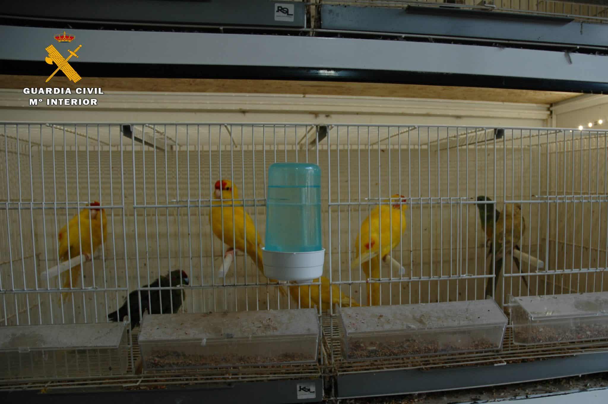 El Seprona interviene 13 aves exóticas en un establecimiento de Logroño 2