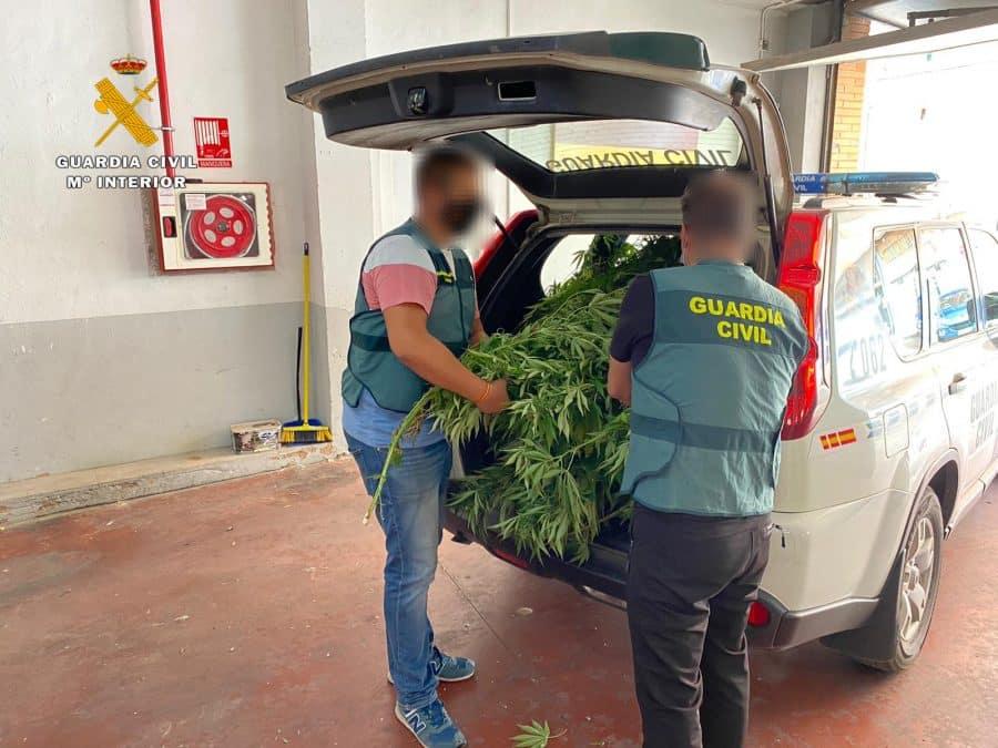 La colaboración ciudadana permite intervenir en tres actuaciones más de 7 kilos de cogollos de marihuana en La Rioja 2