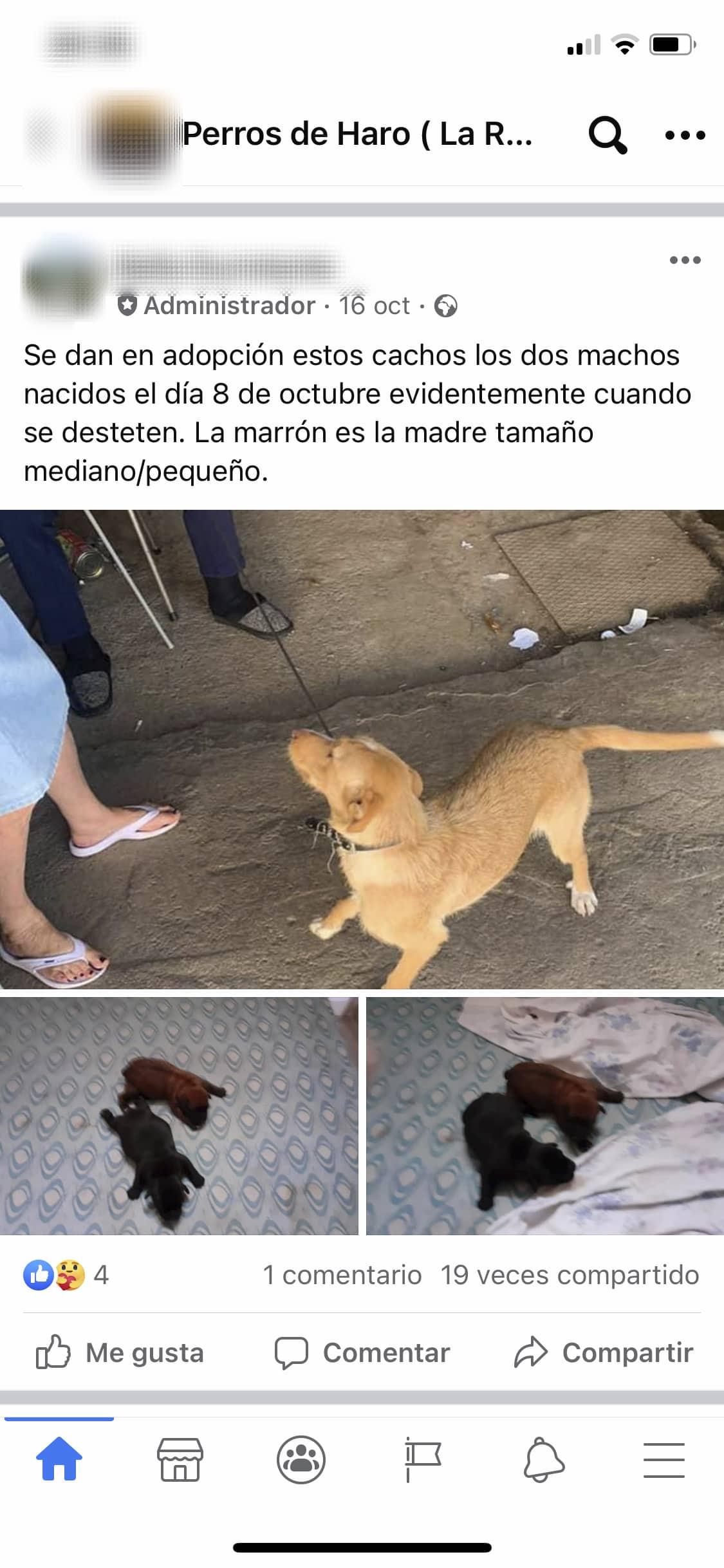 Investigada una vecina de Santo Domingo por un delito de maltrato animal gracias a una prueba de ADN 5