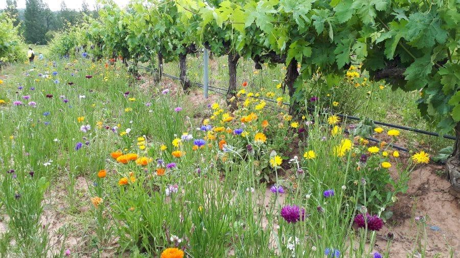 Bilbaínas, La Rioja Alta SA, Ontañón y Vivanco participan en un proyecto franco-español para adaptar el viñedo al cambio climático 4