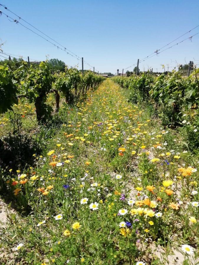 Bilbaínas, La Rioja Alta SA, Ontañón y Vivanco participan en un proyecto franco-español para adaptar el viñedo al cambio climático 3
