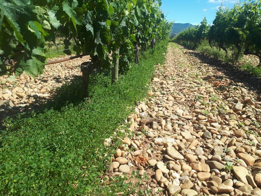 Bilbaínas, La Rioja Alta SA, Ontañón y Vivanco participan en un proyecto franco-español para adaptar el viñedo al cambio climático 2