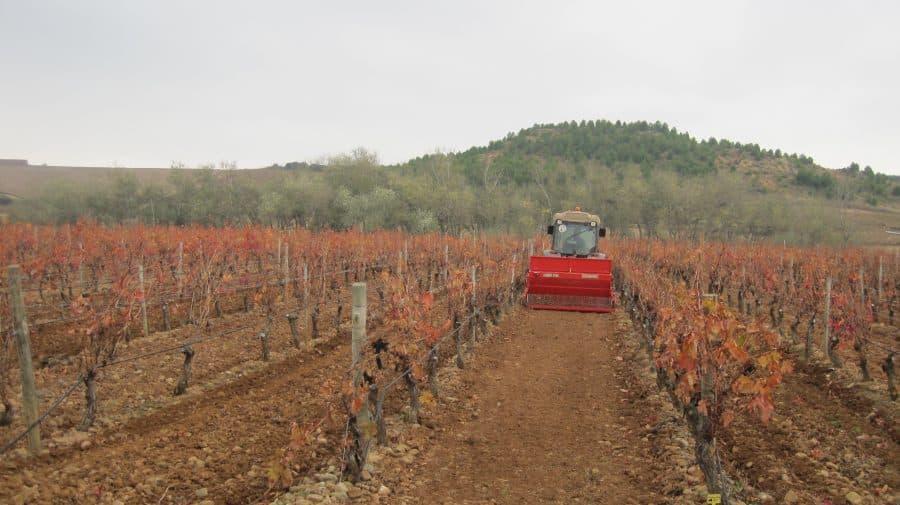 Bilbaínas, La Rioja Alta SA, Ontañón y Vivanco participan en un proyecto franco-español para adaptar el viñedo al cambio climático 5