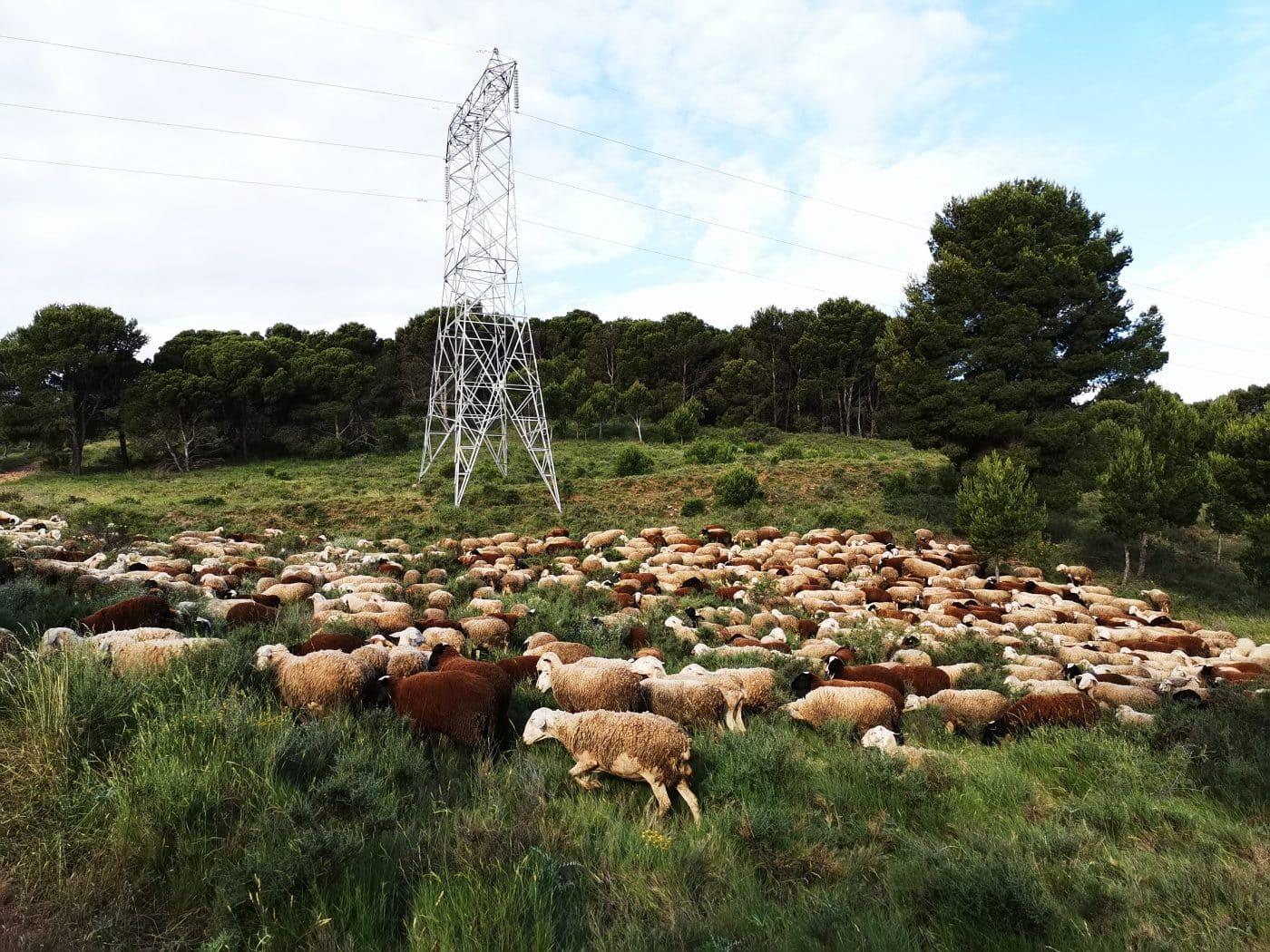 La Rioja destinará 58 millones de euros para impulsar la rentabilidad, competitividad y sostenibilidad del sector agrario y el medio rural 1