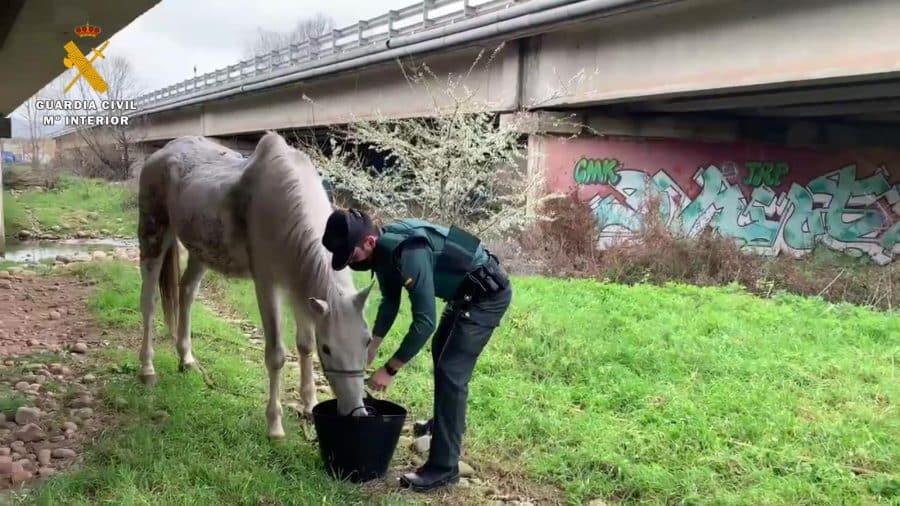 La Guardia Civil investiga a un vecino de La Rioja por abandonar a su caballo 2