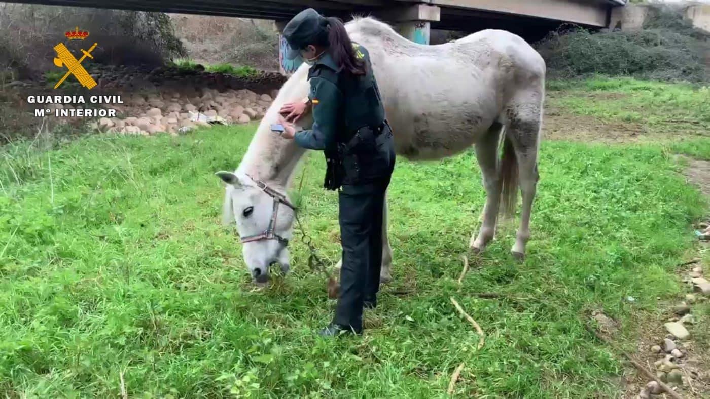 La Guardia Civil investiga a un vecino de La Rioja por abandonar a su caballo 1