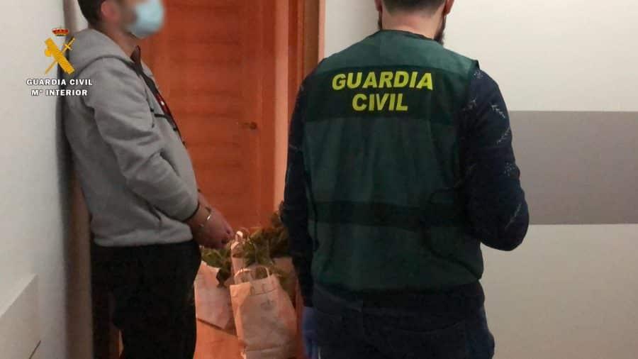 Operación 'Cachi': desmanteladas dos viviendas dedicadas al cultivo de marihuana en Logroño y Oyón 6