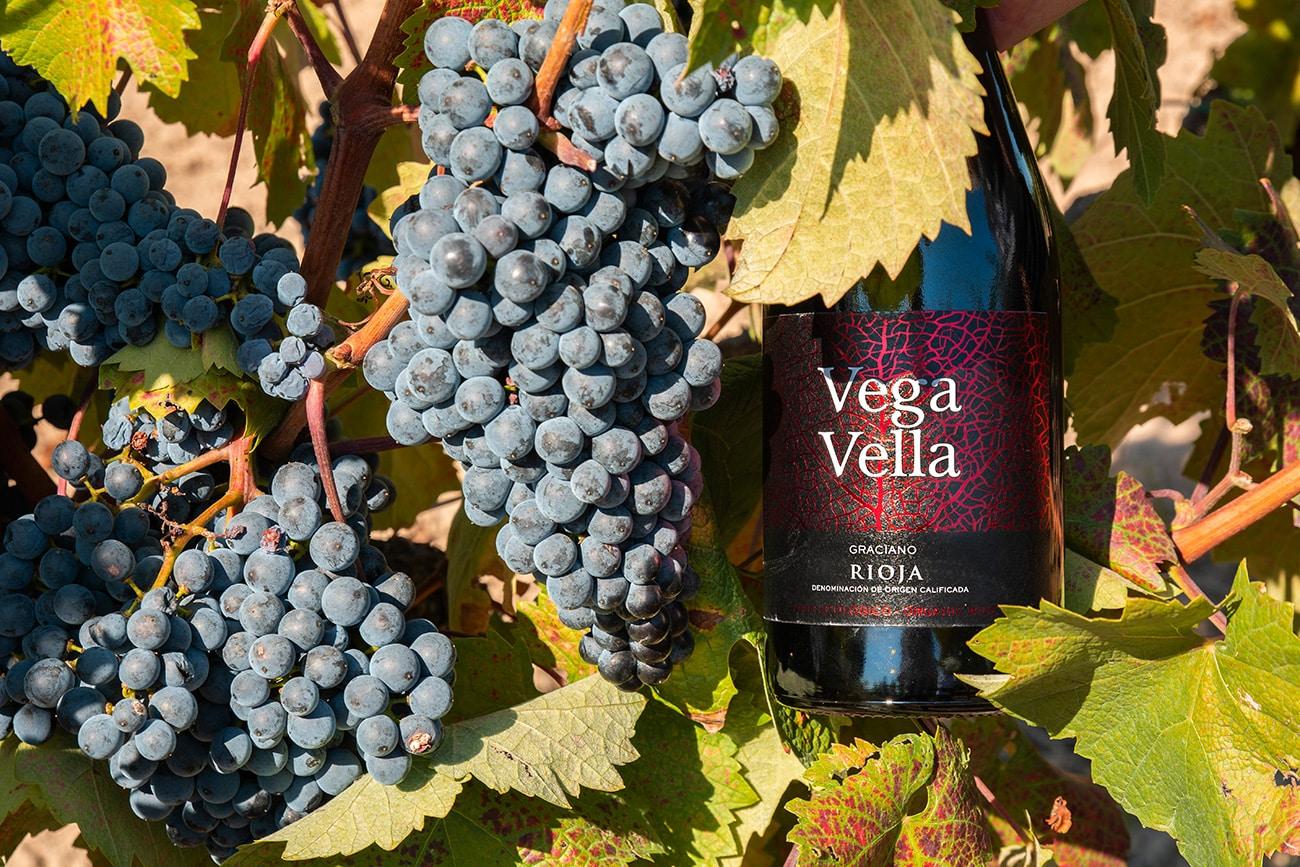Bodegas Cornelio Dinastía lanza su vino ecológico Vega Vella Graciano 2